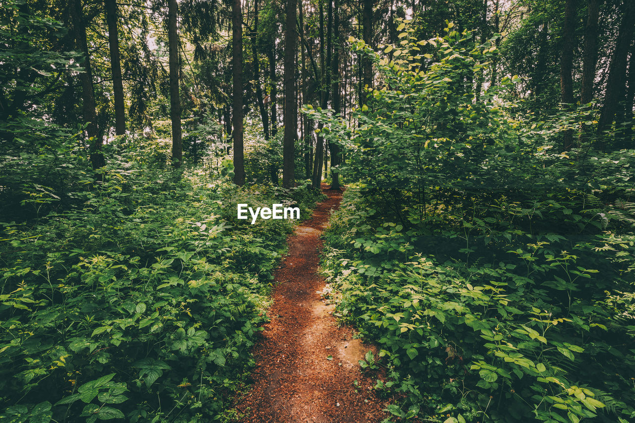 plant, tree, forest, land, growth, tranquility, beauty in nature, direction, green color, tranquil scene, the way forward, nature, footpath, no people, day, woodland, non-urban scene, scenics - nature, lush foliage, foliage, outdoors, trail