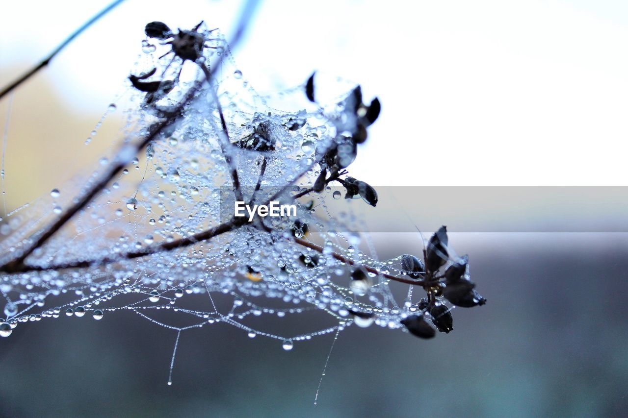 close-up, focus on foreground, spider web, spider, one animal, web, fragility, no people, animal themes, nature, drop, day, outdoors, animals in the wild, beauty in nature
