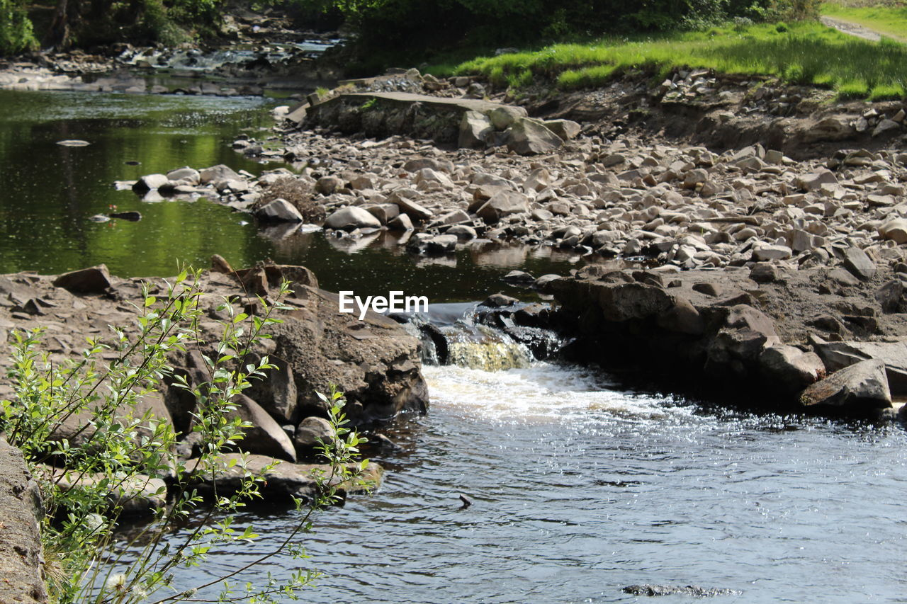 water, rock, nature, solid, no people, rock - object, day, plant, beauty in nature, river, land, animal themes, motion, scenics - nature, animal, tranquility, flowing water, outdoors, flowing, stream - flowing water