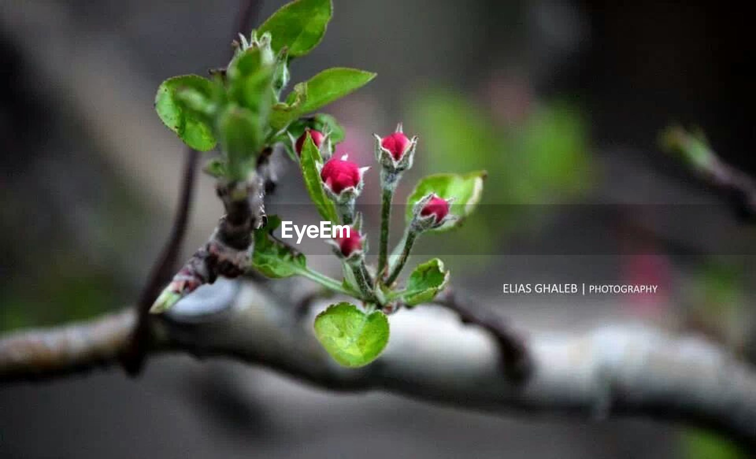 flower, growth, freshness, leaf, plant, focus on foreground, close-up, bud, fragility, nature, beauty in nature, stem, selective focus, beginnings, green color, petal, new life, twig, blossom, growing