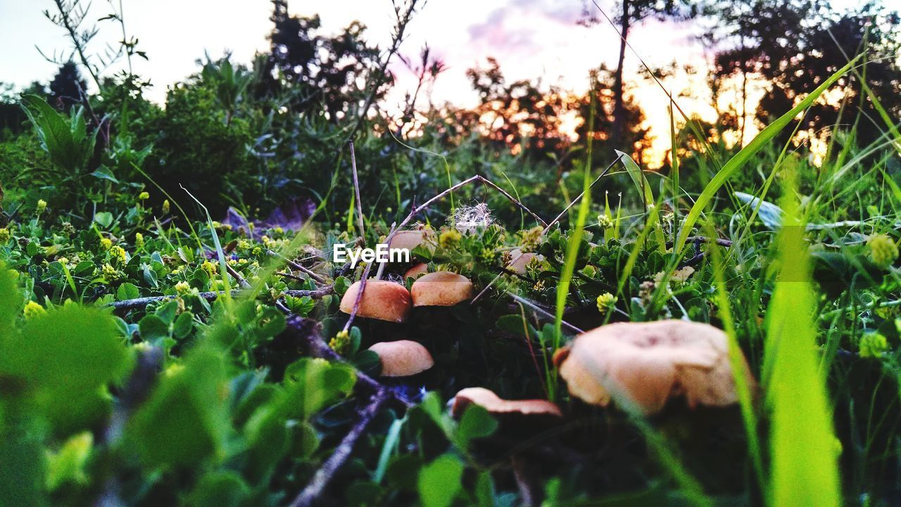 High Angle View Of Mushrooms Growing On Field Against Trees