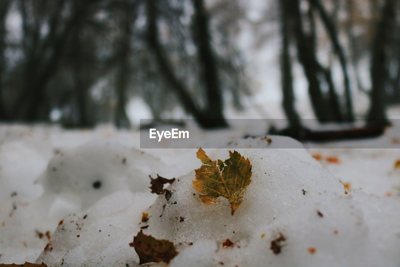 nature, winter, snow, cold temperature, no people, tree, tranquility, beauty in nature, outdoors, close-up, day, fragility