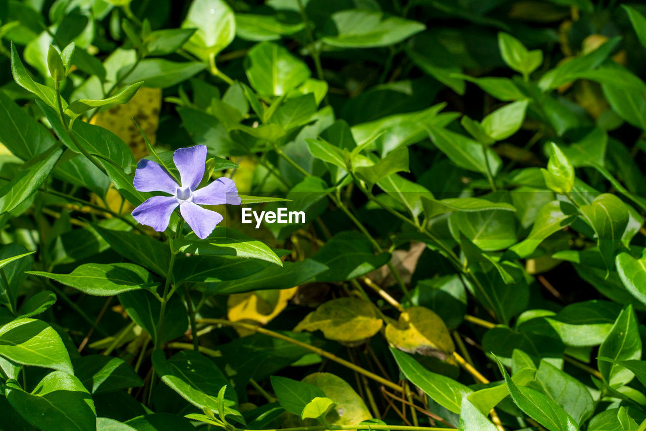 plant, growth, plant part, flower, vulnerability, leaf, fragility, flowering plant, beauty in nature, freshness, petal, green color, close-up, flower head, nature, inflorescence, day, no people, blue, focus on foreground, purple, outdoors