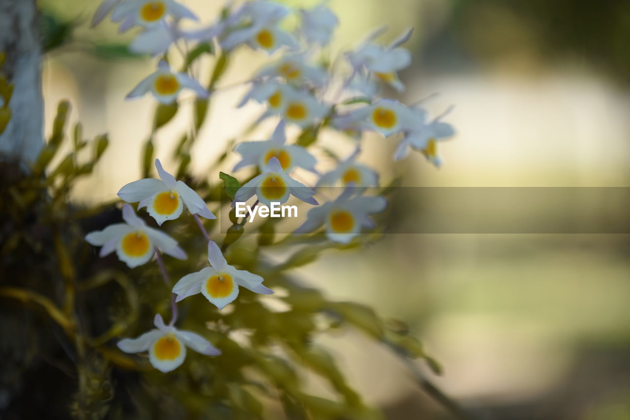 flowering plant, flower, plant, vulnerability, fragility, beauty in nature, freshness, growth, close-up, petal, flower head, inflorescence, nature, focus on foreground, selective focus, day, no people, white color, outdoors, pollen