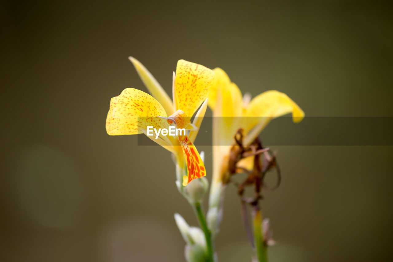 flower, flowering plant, vulnerability, fragility, yellow, beauty in nature, plant, growth, freshness, petal, flower head, close-up, inflorescence, nature, no people, focus on foreground, pollen, selective focus, outdoors, iris - plant