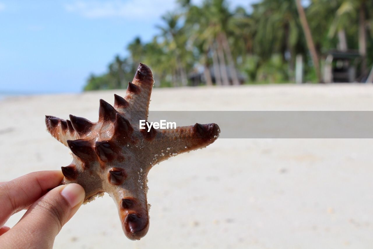 human hand, hand, human body part, one person, focus on foreground, unrecognizable person, body part, close-up, holding, finger, day, real people, nature, human finger, beach, one animal, personal perspective, animal, sand, land, starfish