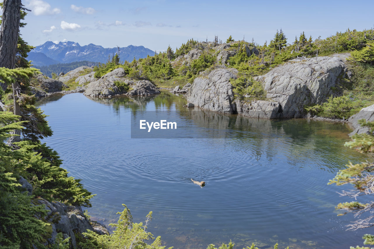 water, vertebrate, animal themes, animal wildlife, mountain, animal, animals in the wild, bird, beauty in nature, scenics - nature, flying, nature, day, lake, one animal, tranquility, rock, tranquil scene, no people, mountain range, outdoors