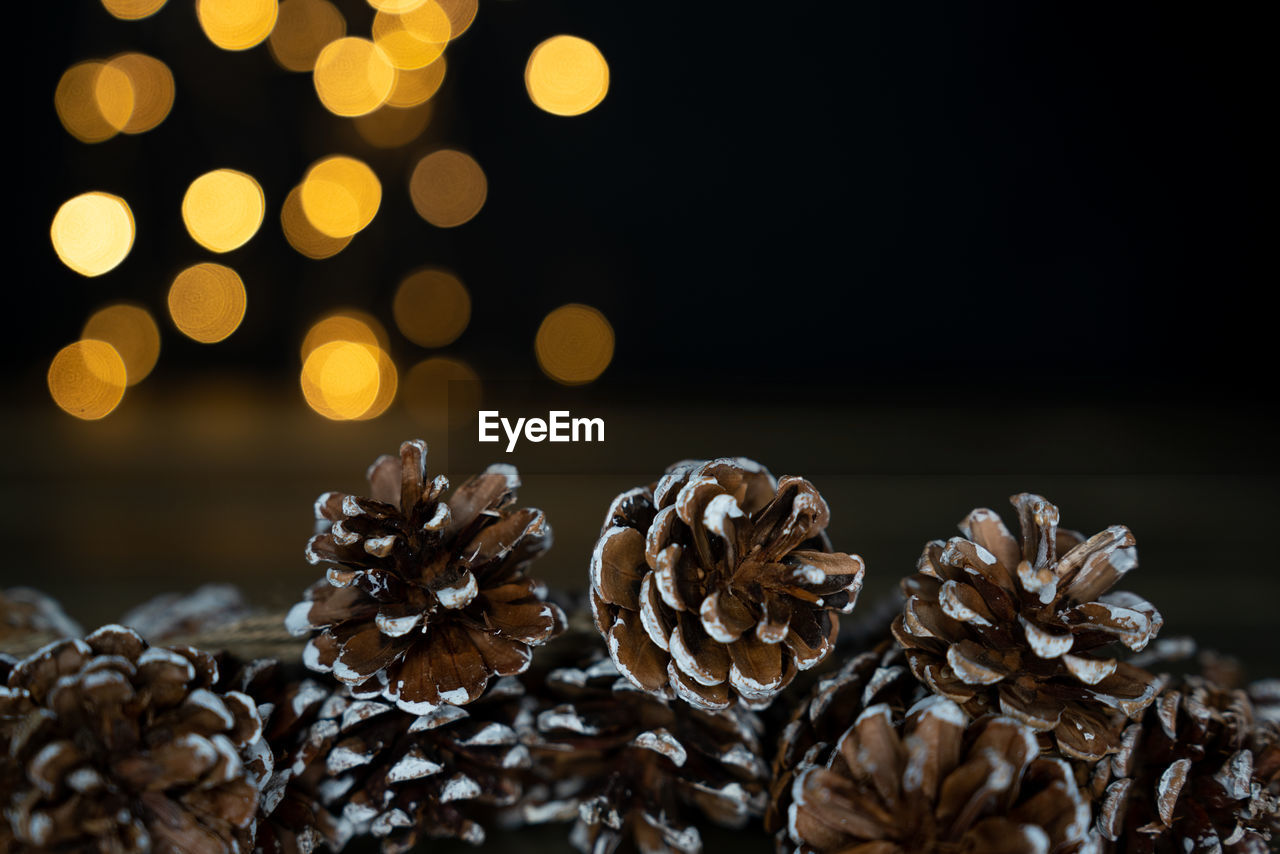 close-up, no people, plant, pine cone, pattern, indoors, focus on foreground, selective focus, night, vulnerability, nature, dry, beauty in nature, flower, flowering plant, fragility, christmas, still life, freshness, christmas decoration, wilted plant, flower head, dried