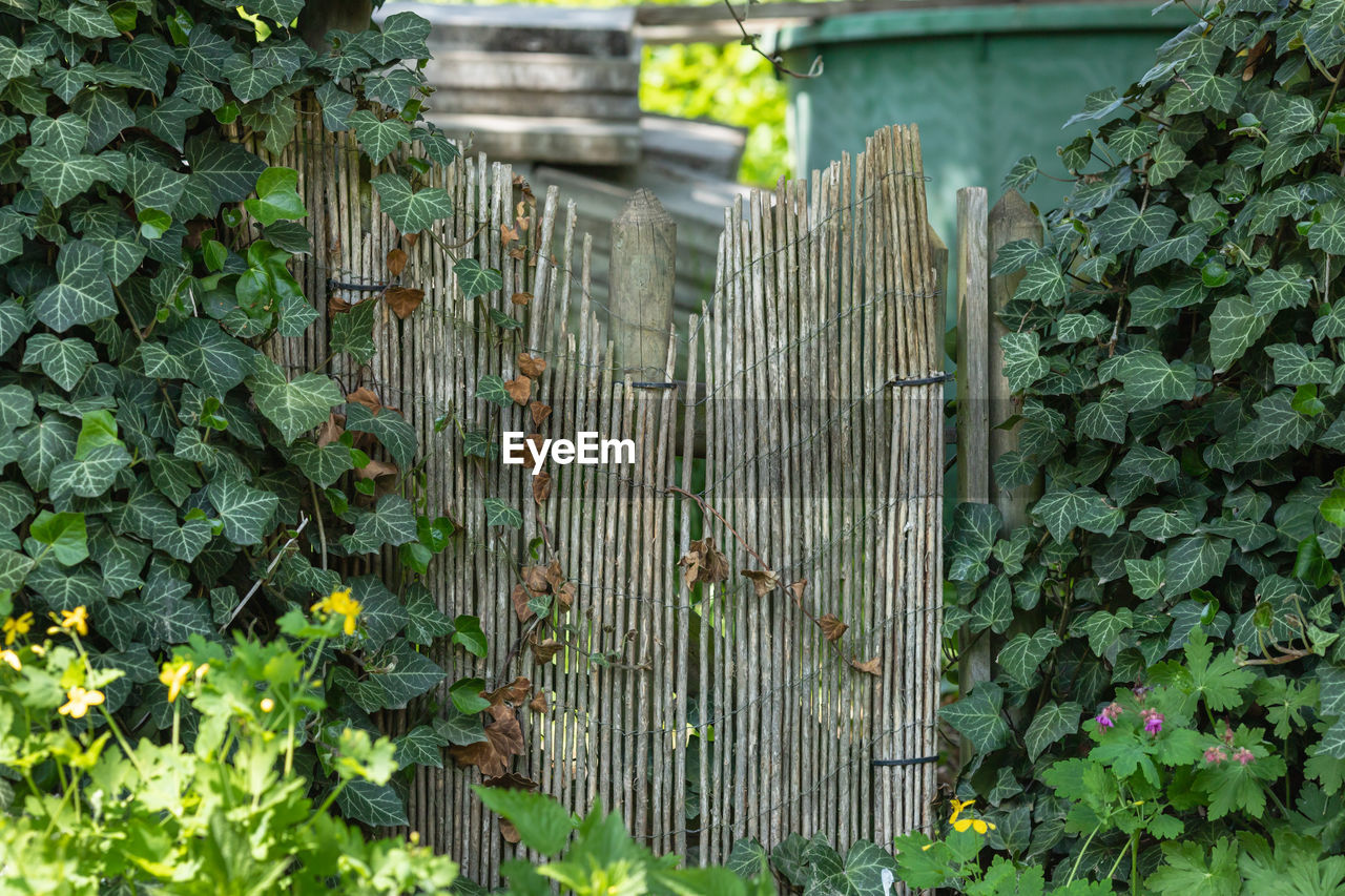green color, growth, plant, leaf, plant part, barrier, boundary, fence, nature, no people, day, security, outdoors, protection, safety, wood - material, beauty in nature, built structure, architecture, metal