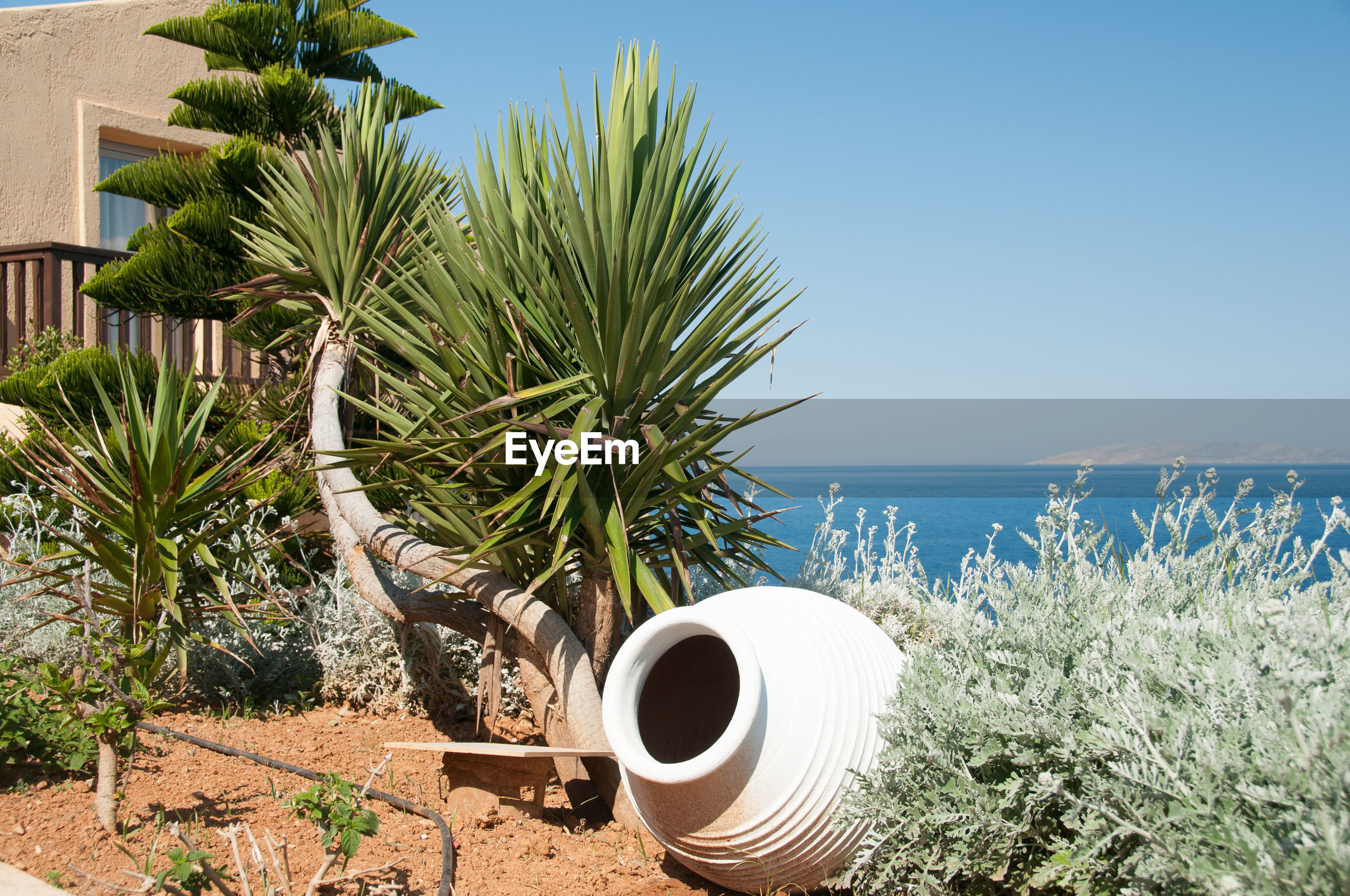 Pot and plants by sea against clear sky