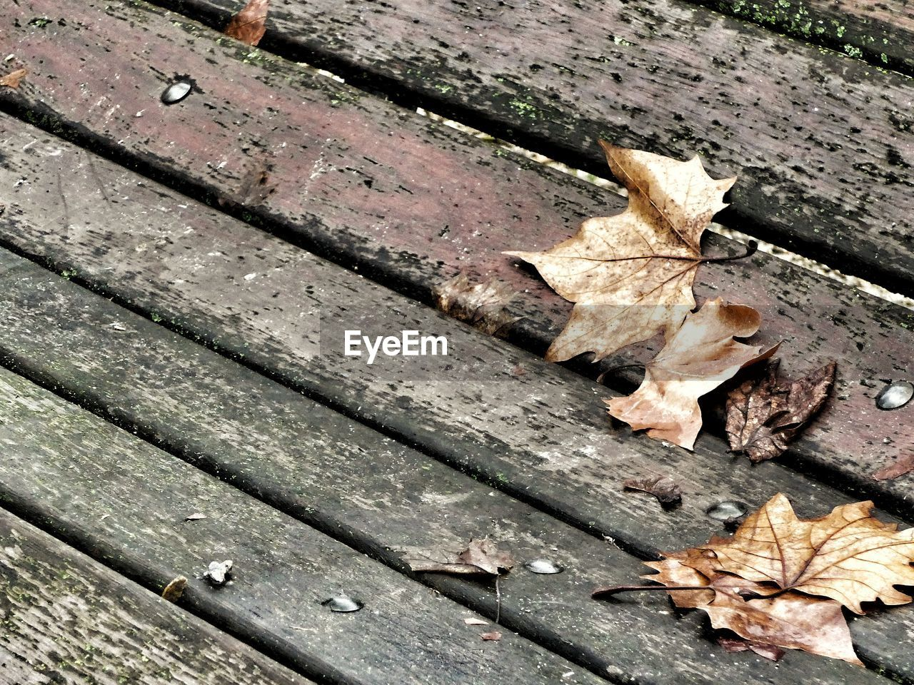 autumn, leaf, change, dry, leaves, fallen, outdoors, nature, day, maple leaf, maple, close-up, no people, wood - material, fragility, beauty in nature