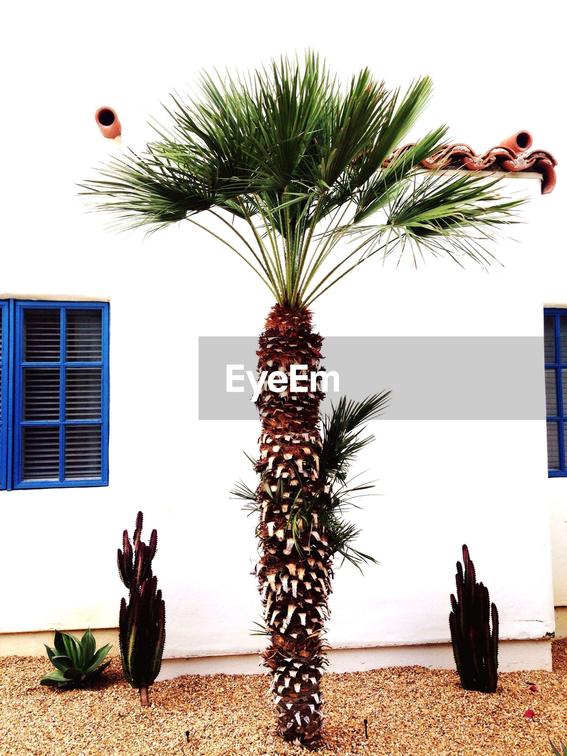 palm tree, tree, clear sky, potted plant, building exterior, growth, built structure, decoration, art and craft, sky, animal representation, architecture, creativity, art, celebration, plant, no people, outdoors, sea, coconut palm tree