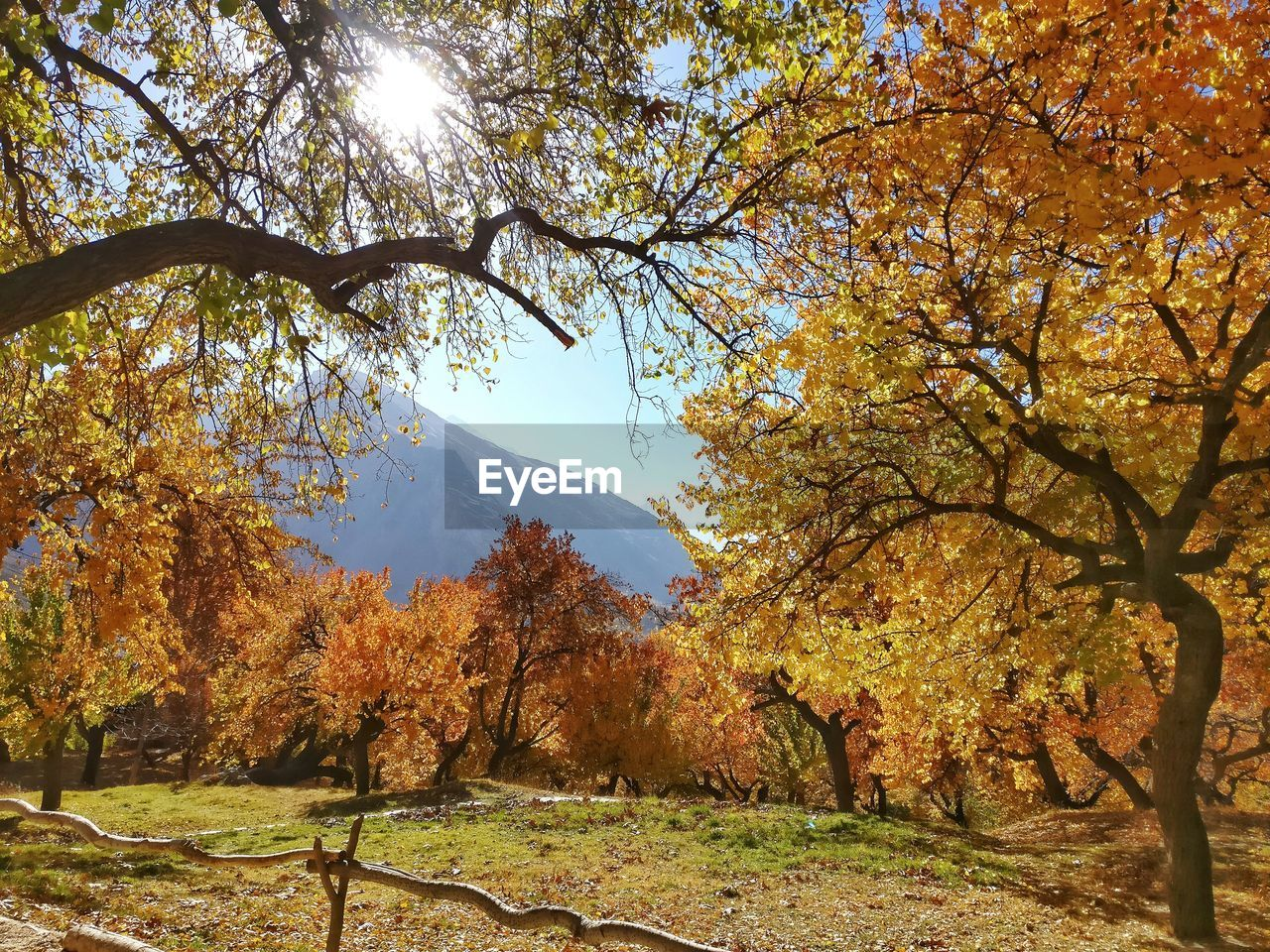 autumn, tree, plant, change, beauty in nature, nature, tranquility, tranquil scene, branch, scenics - nature, growth, day, leaf, plant part, sunlight, mountain, no people, non-urban scene, sky, outdoors, autumn collection, fall