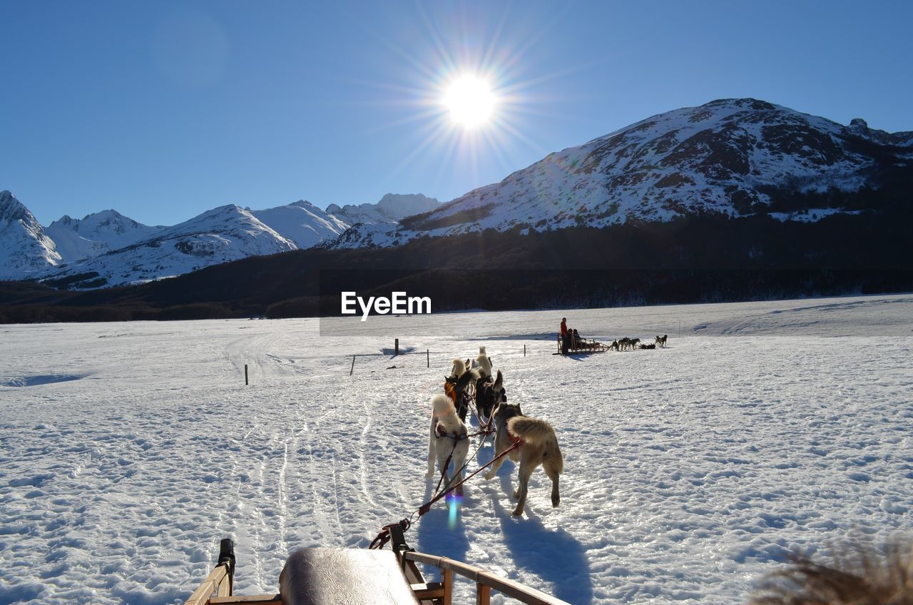People Dog Sledding On Snowcapped Mountain Against Sky