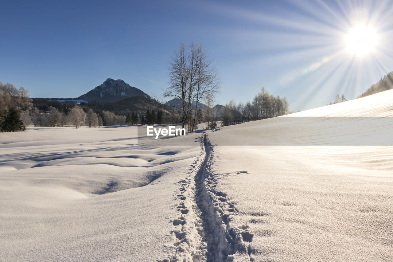 snow, cold temperature, winter, sky, tree, beauty in nature, nature, tranquil scene, plant, tranquility, scenics - nature, mountain, landscape, sunlight, covering, field, the way forward, environment, sun, no people, outdoors, lens flare, snowcapped mountain, powder snow, bright