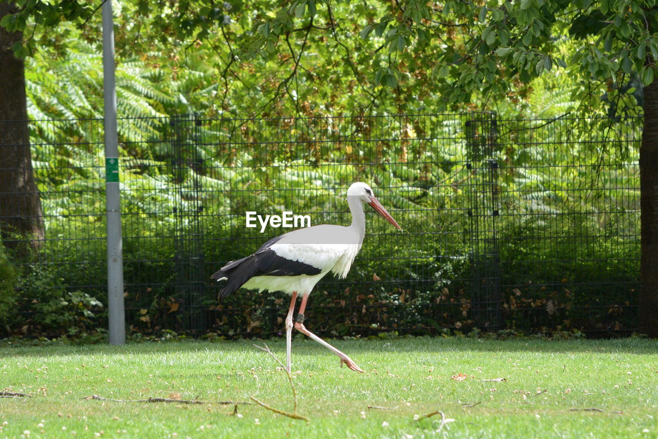 animal wildlife, animal, plant, animal themes, tree, bird, one animal, animals in the wild, vertebrate, nature, day, stork, forest, full length, land, grass, no people, side view, green color, white stork, outdoors, profile view, animal neck
