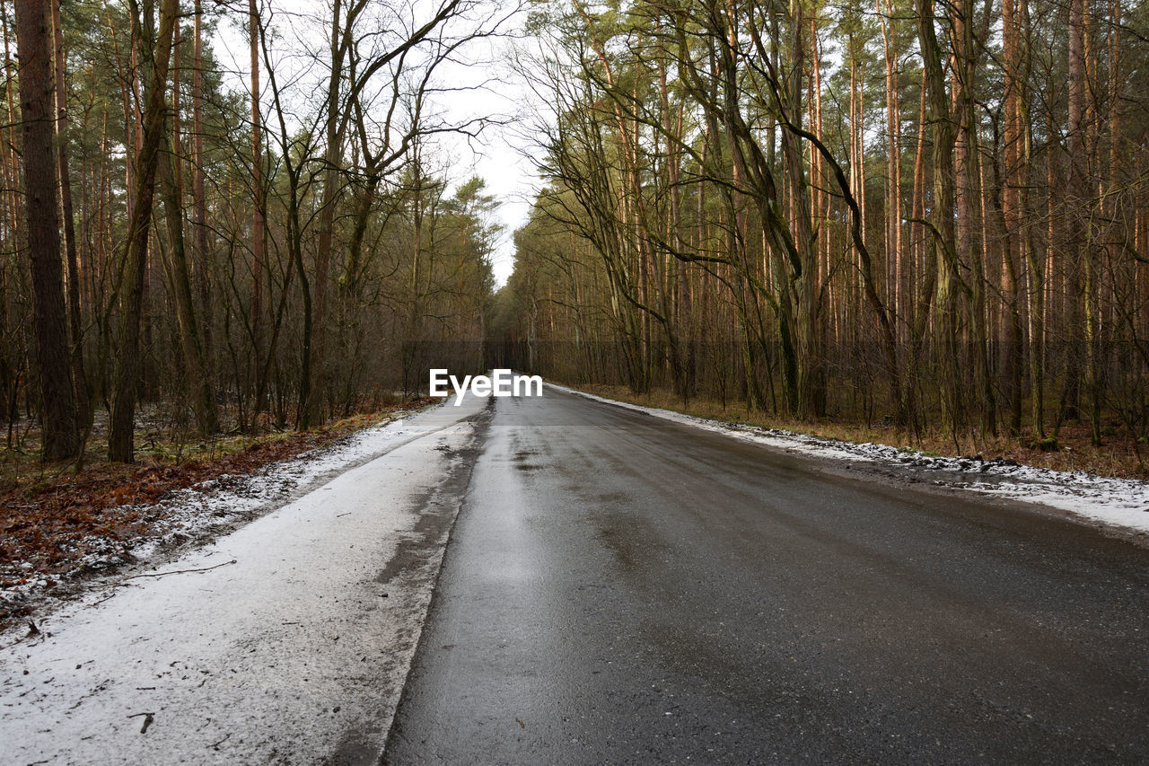 tree, direction, road, the way forward, plant, transportation, forest, diminishing perspective, no people, nature, empty road, tranquility, day, beauty in nature, land, asphalt, tranquil scene, winter, non-urban scene, woodland, outdoors, surface level