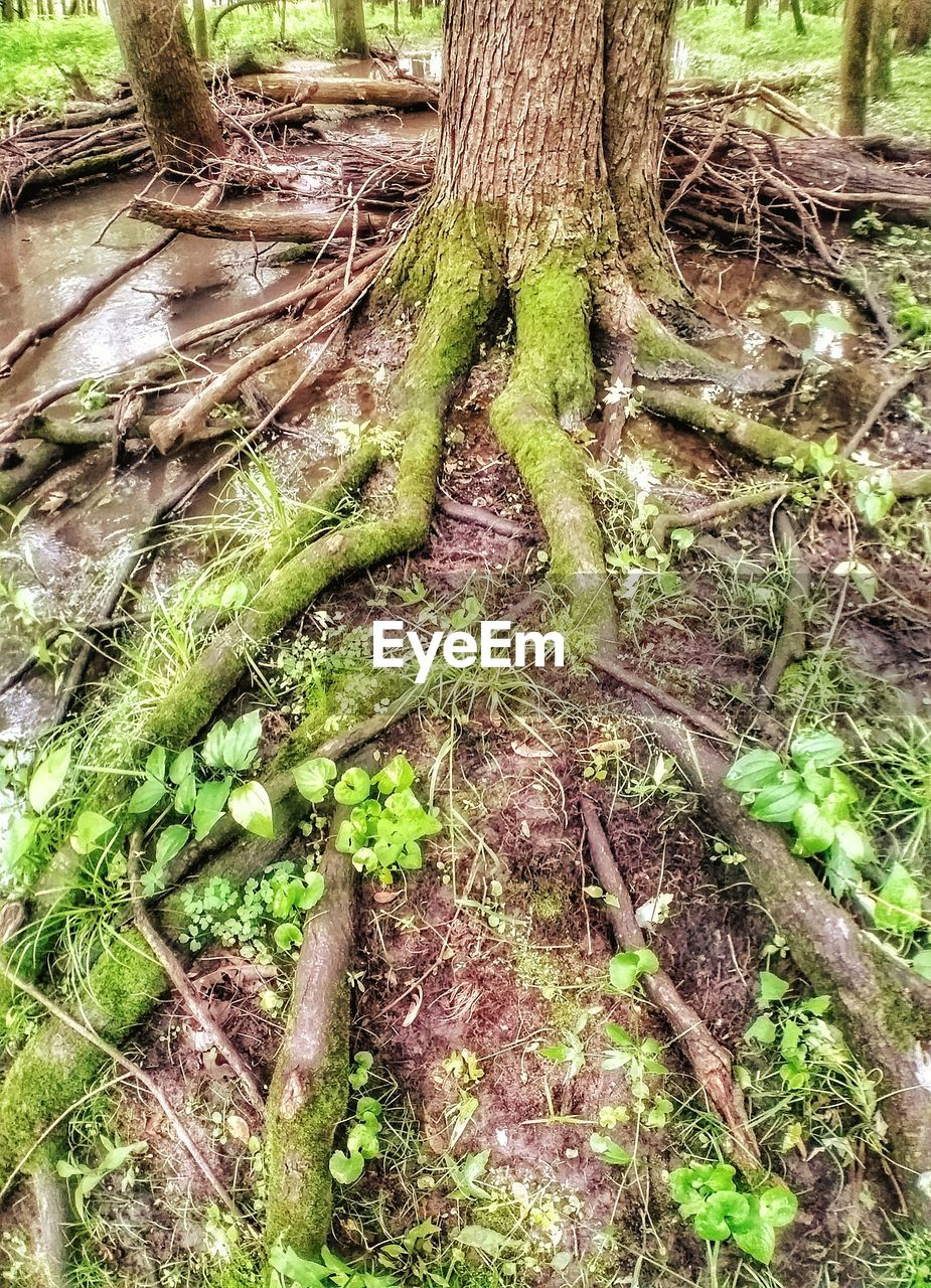 plant, tree, tree trunk, trunk, growth, land, moss, forest, green color, nature, no people, day, tranquility, close-up, field, plant part, outdoors, beauty in nature, root, high angle view
