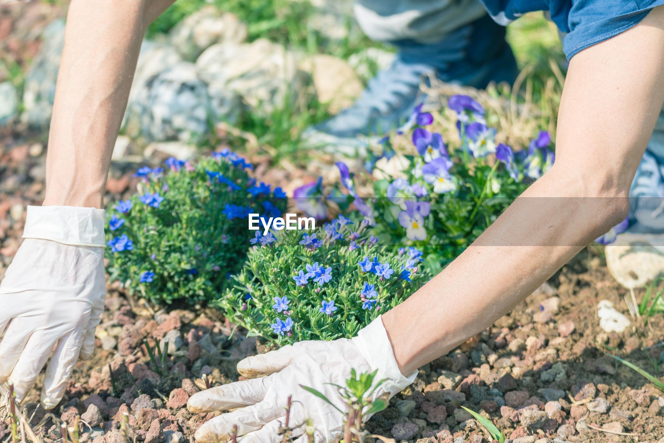 Close-up of woman gardening