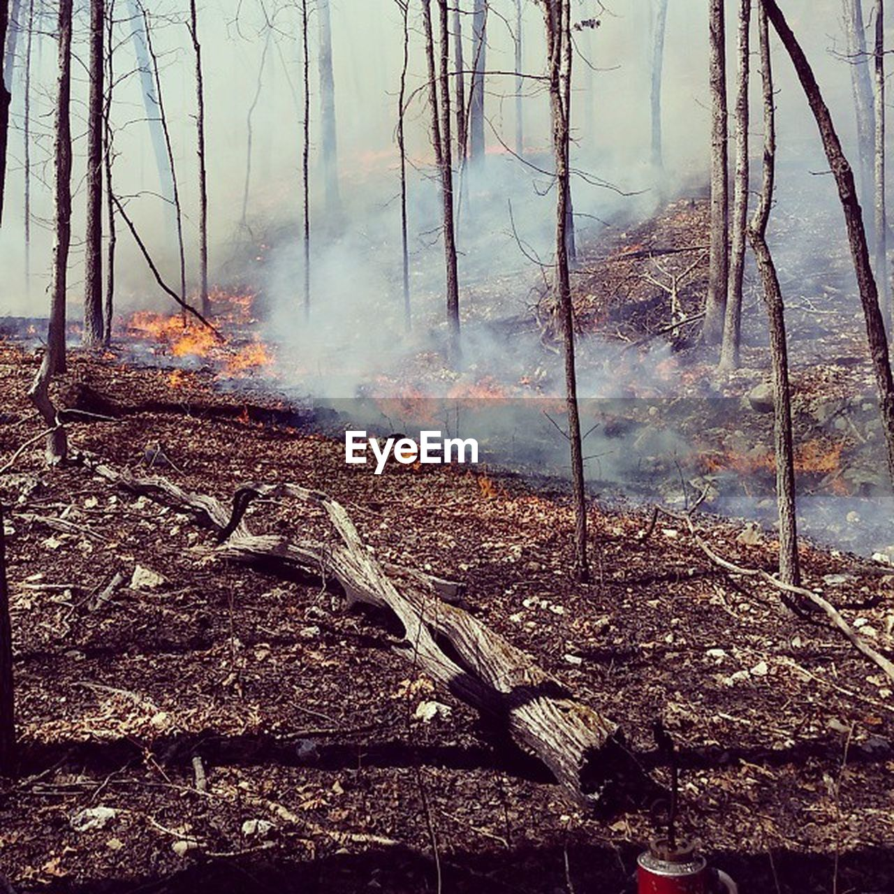 smoke - physical structure, burning, heat - temperature, forest fire, nature, environmental issues, deforestation, no people, tree, destruction, forest, day, outdoors, landscape, mountain, global warming, beauty in nature