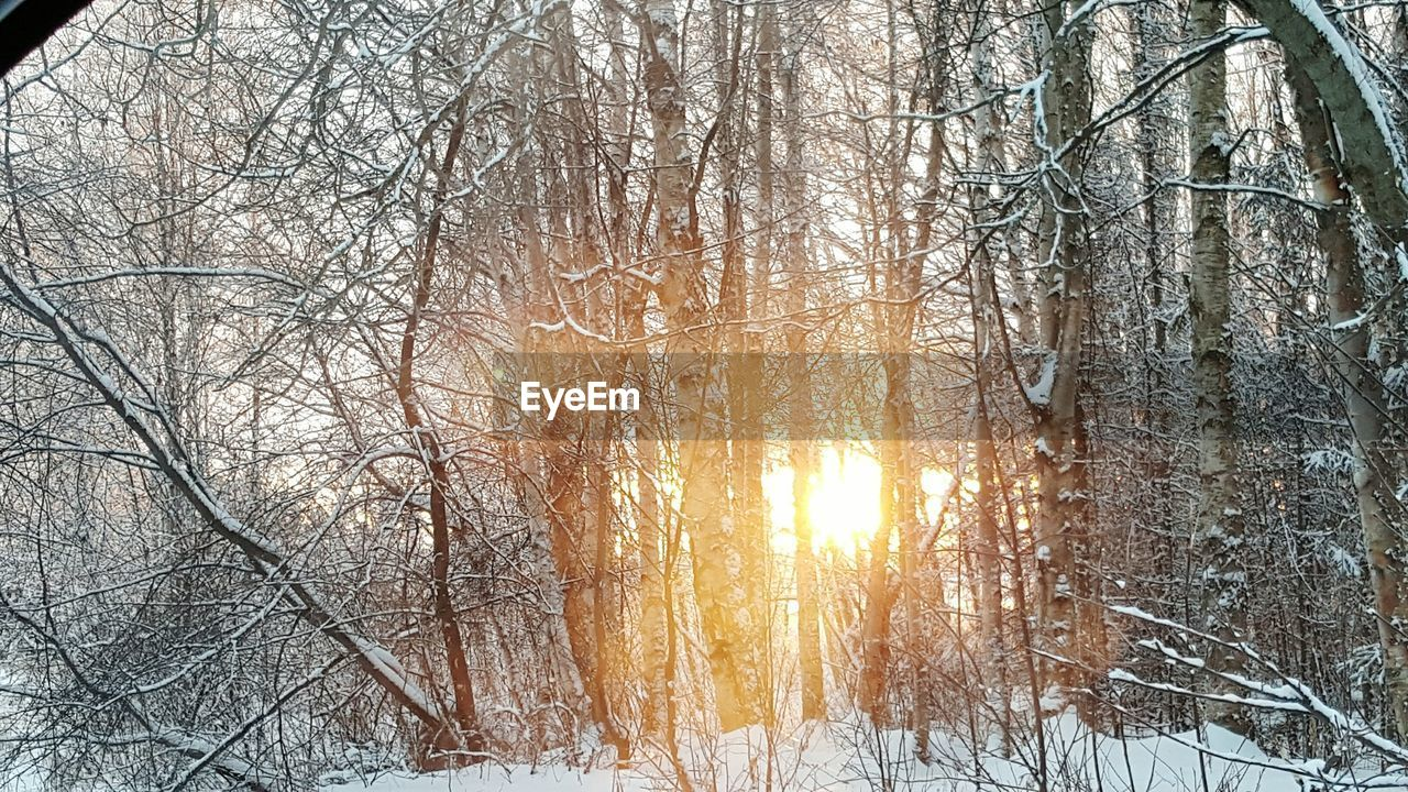 winter, bare tree, snow, cold temperature, nature, tree, forest, tranquility, beauty in nature, outdoors, frozen, branch, tranquil scene, no people, scenics, day, sunlight, landscape, snowing, sky