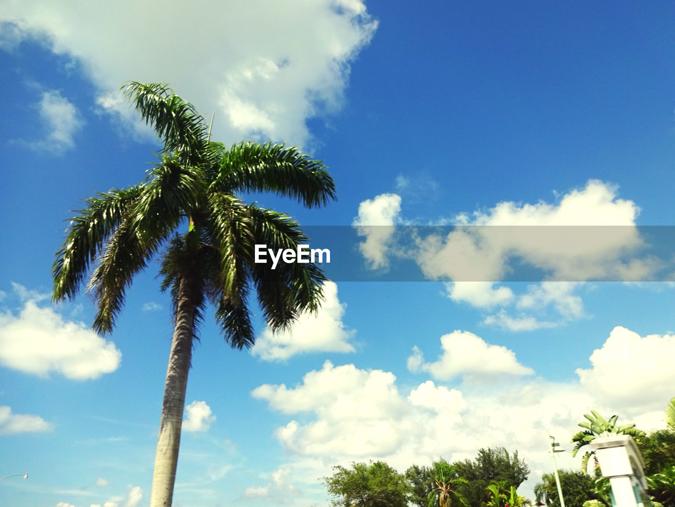 palm tree, low angle view, sky, tree, cloud - sky, blue, growth, cloud, nature, tranquility, beauty in nature, tree trunk, coconut palm tree, cloudy, scenics, day, tranquil scene, green color, outdoors, no people