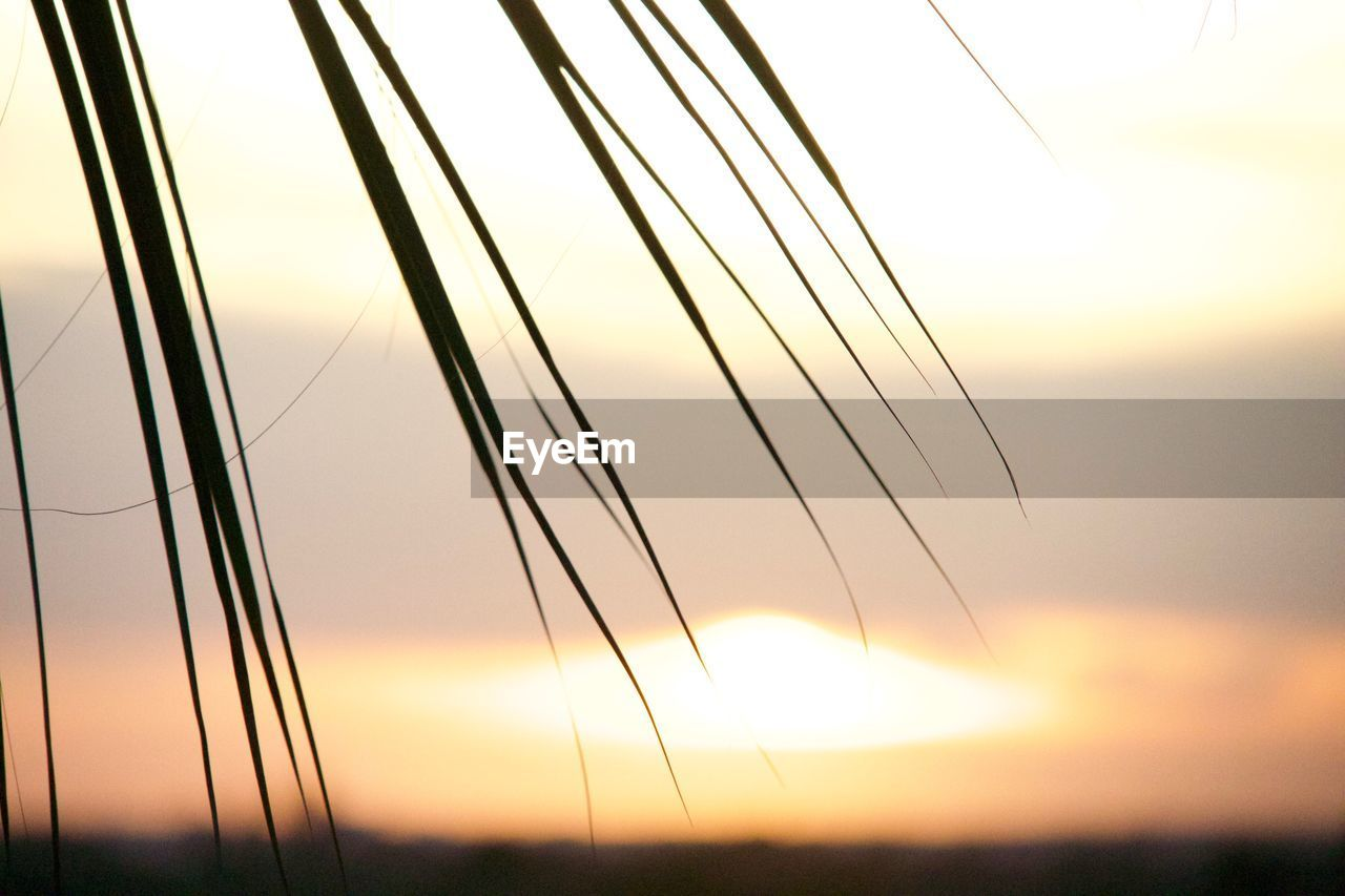 sunset, nature, sky, no people, tranquility, tranquil scene, outdoors, scenics, beauty in nature, focus on foreground, grass, growth, close-up, day