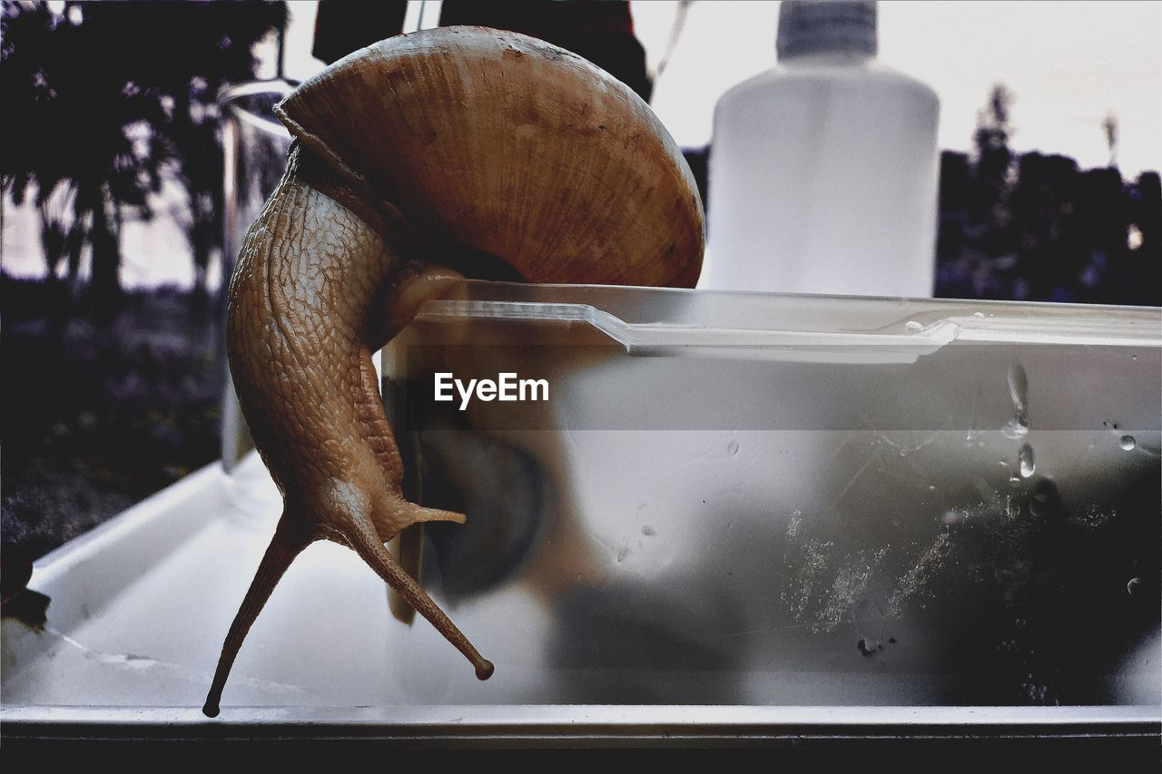 Close-Up Of Snail On Container