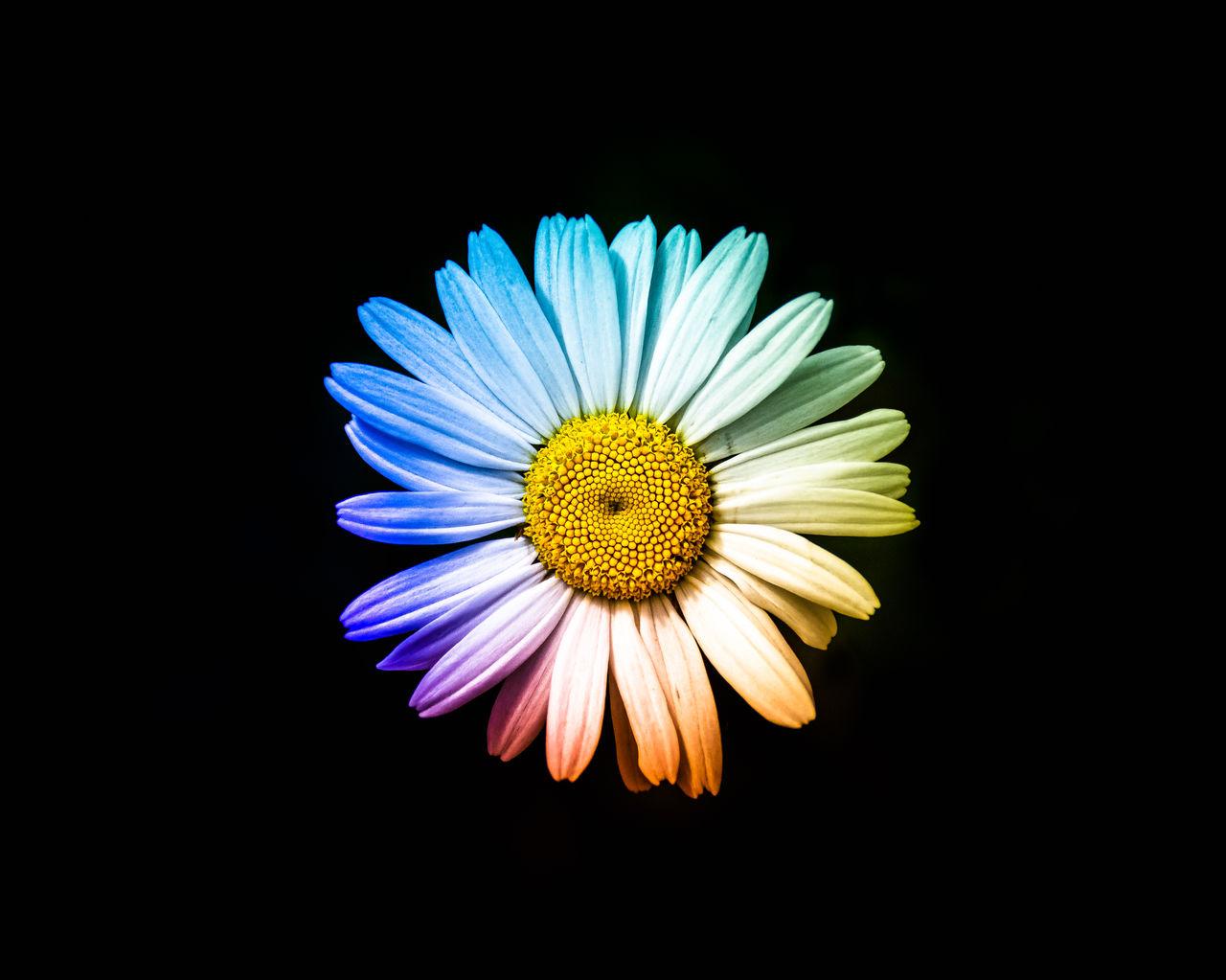 CLOSE UP OF PURPLE FLOWER
