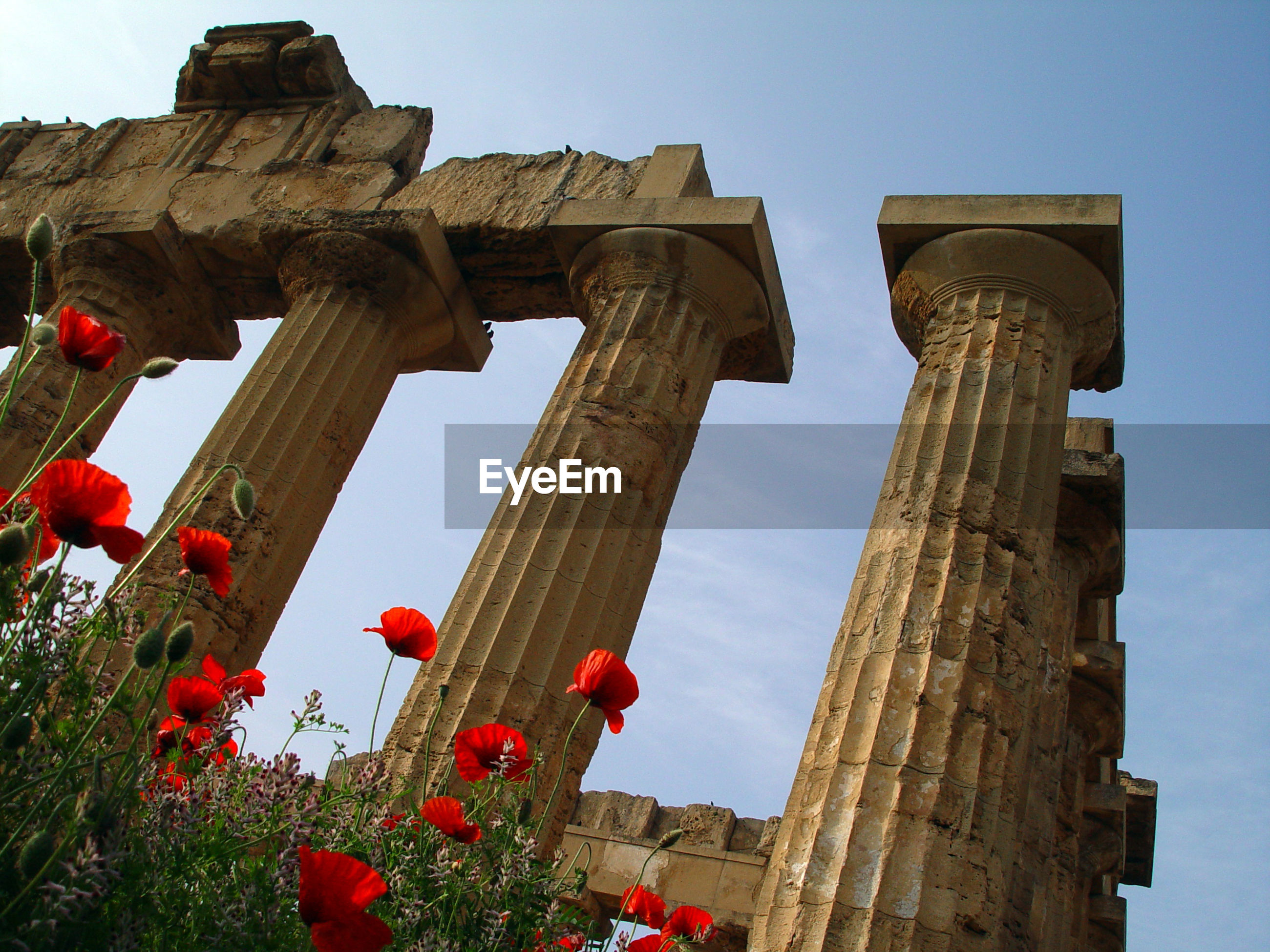 sky, architecture, flower, the past, built structure, flowering plant, history, nature, low angle view, day, no people, tourism, ancient, travel destinations, old ruin, plant, architectural column, travel, building exterior, ancient civilization, outdoors, archaeology, ruined
