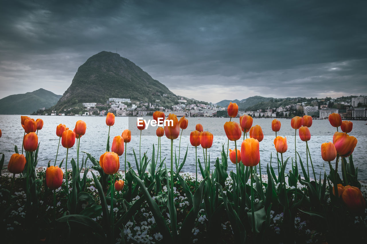 beauty in nature, cloud - sky, sky, plant, mountain, orange color, nature, growth, scenics - nature, land, no people, field, environment, tranquility, landscape, freshness, tranquil scene, overcast, day, outdoors, flower head, orange