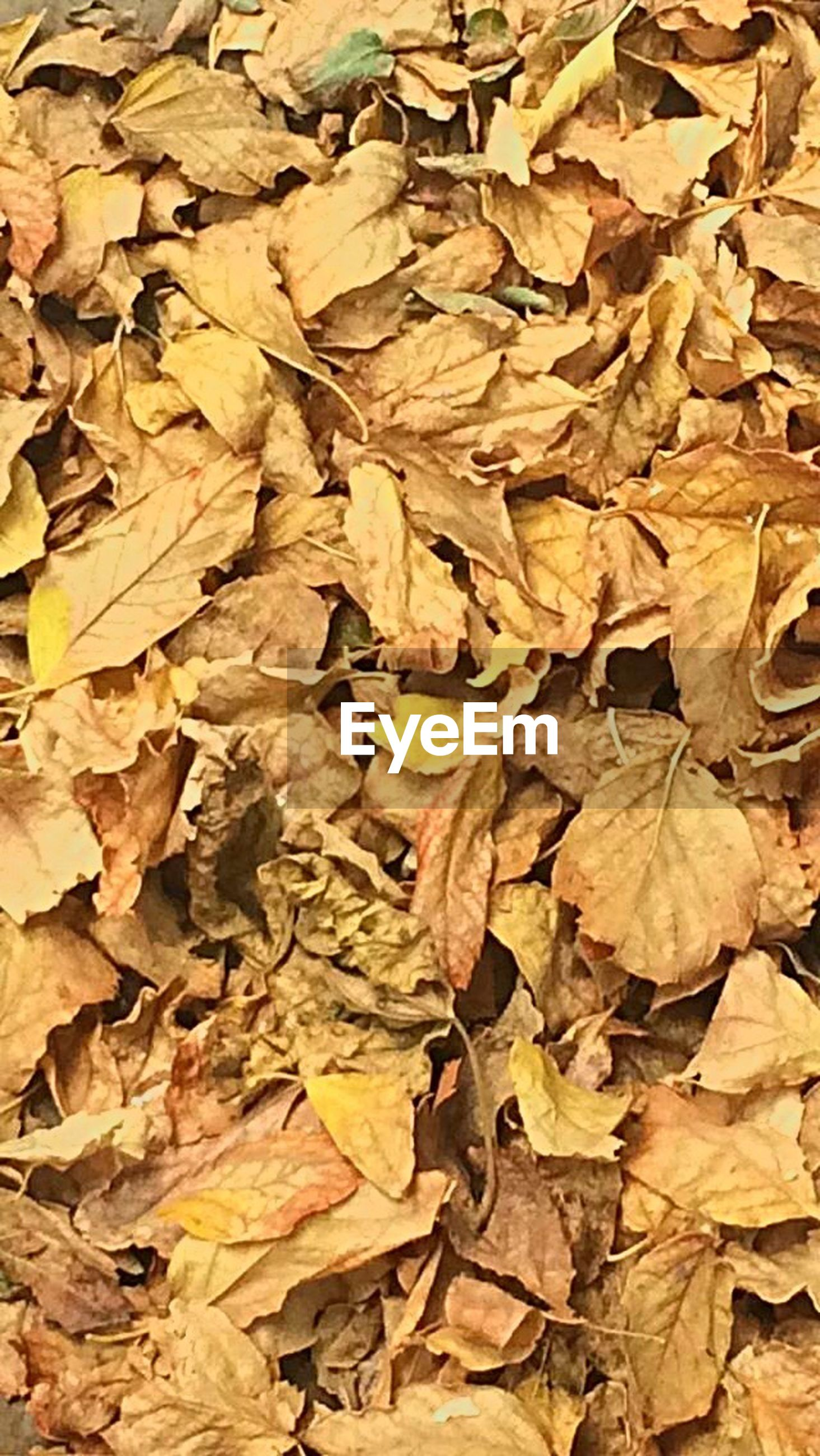 full frame, backgrounds, leaf, autumn, abundance, change, nature, close-up, large group of objects, no people, fragility, pattern, tree, textured, brown, outdoors, beauty in nature, day