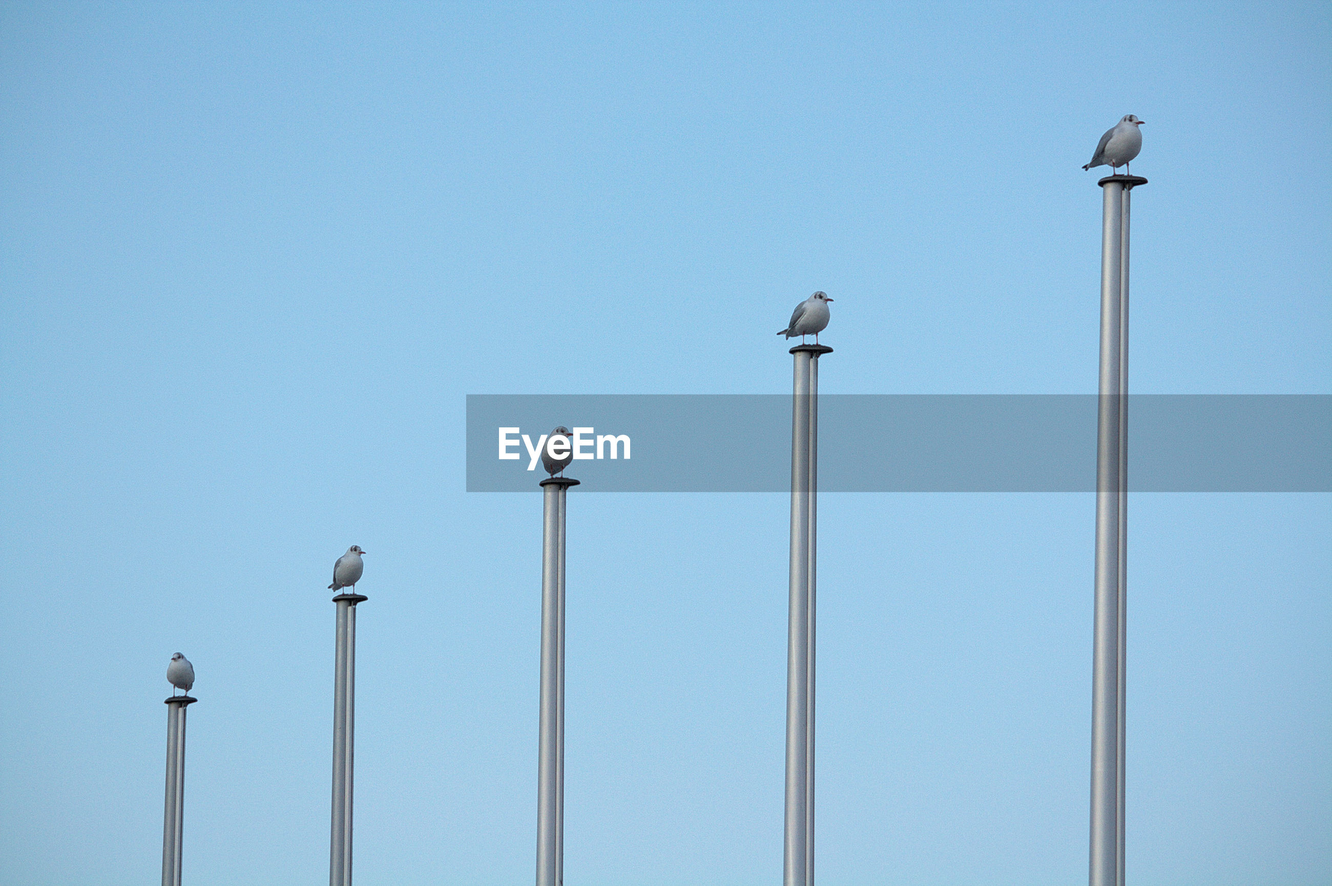 Low angle view of birds perching on pole against blue sky