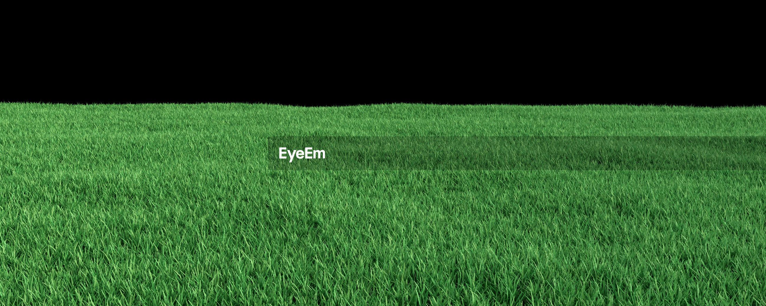 Panoramic shot of grassy field at night