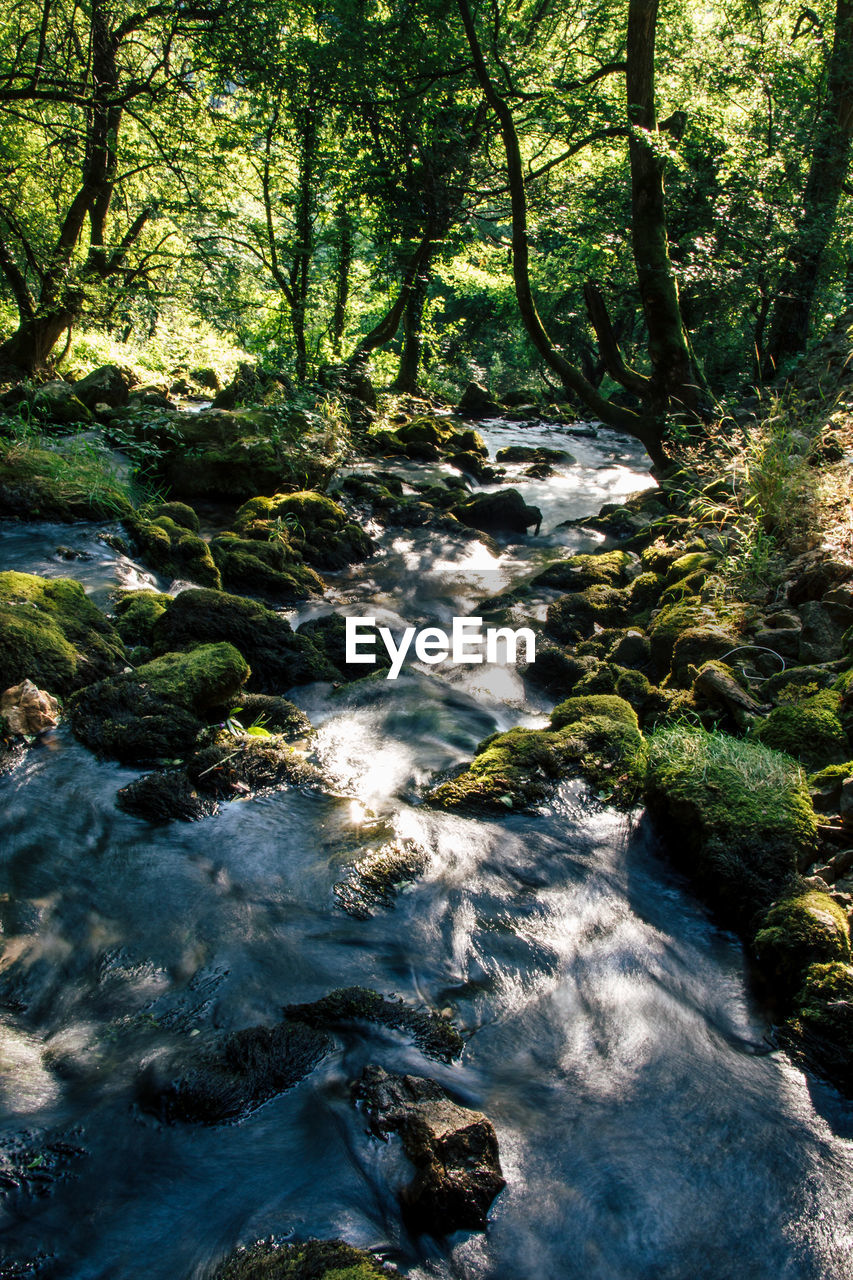 tree, plant, forest, beauty in nature, water, nature, motion, scenics - nature, land, flowing water, no people, growth, day, rock, flowing, river, tranquility, long exposure, solid, outdoors, stream - flowing water, woodland, rainforest
