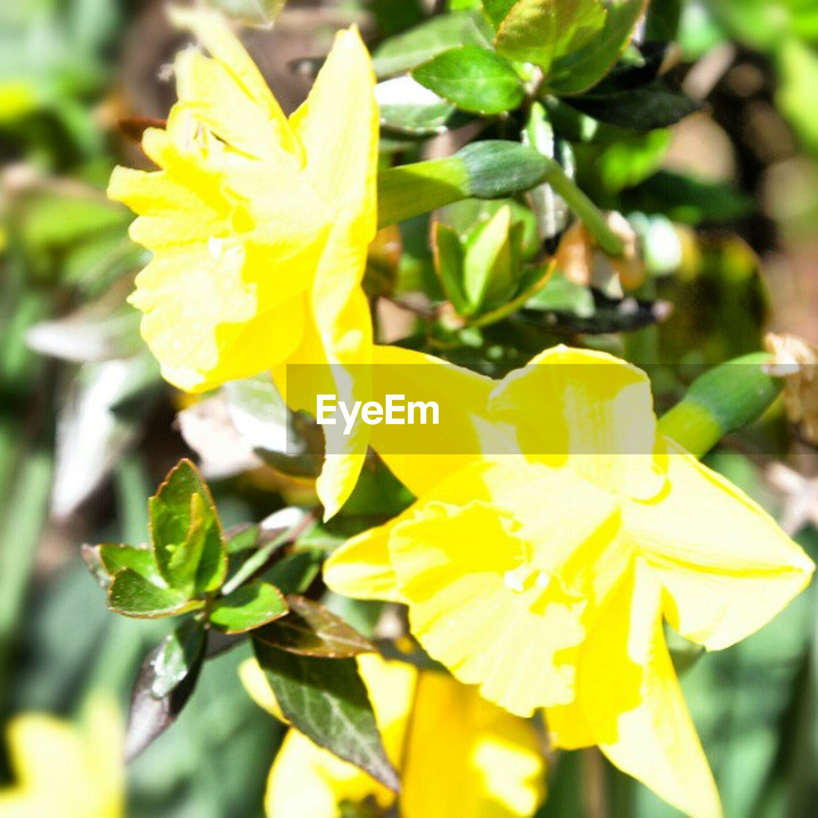 flower, petal, freshness, flower head, fragility, yellow, growth, beauty in nature, close-up, focus on foreground, blooming, nature, plant, in bloom, pollen, park - man made space, blossom, day, outdoors, stamen