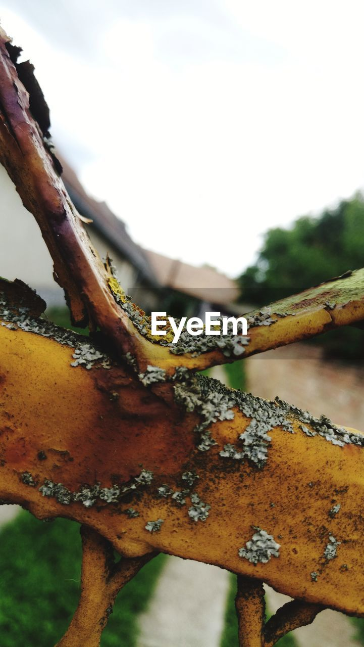 plant, close-up, focus on foreground, no people, day, nature, tree, rusty, metal, growth, branch, outdoors, sky, lichen, selective focus, beauty in nature, low angle view, plant part, fence, deterioration