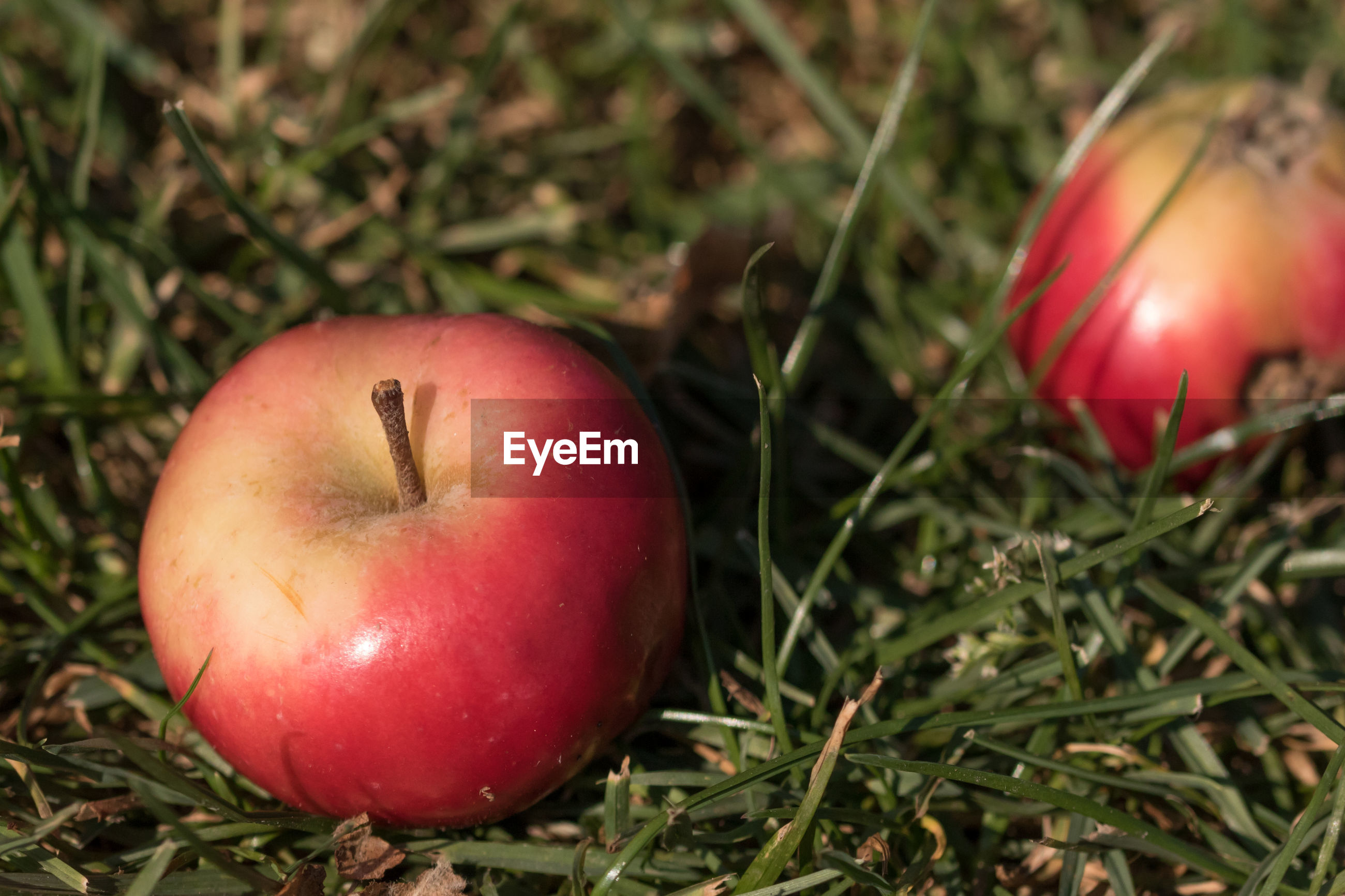 Close-up of apples on grass