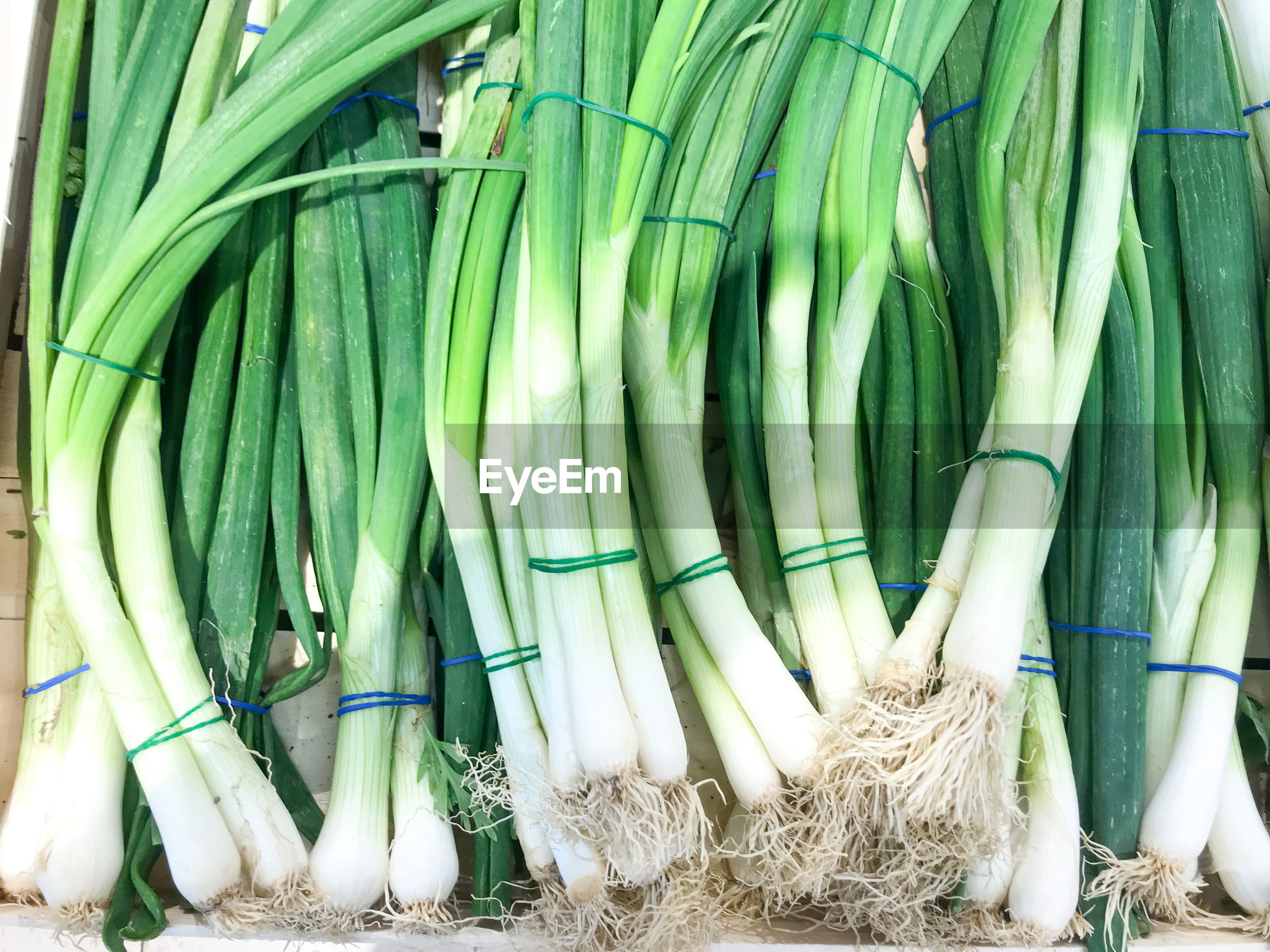 Photo of green onion background. healthy fresh food background