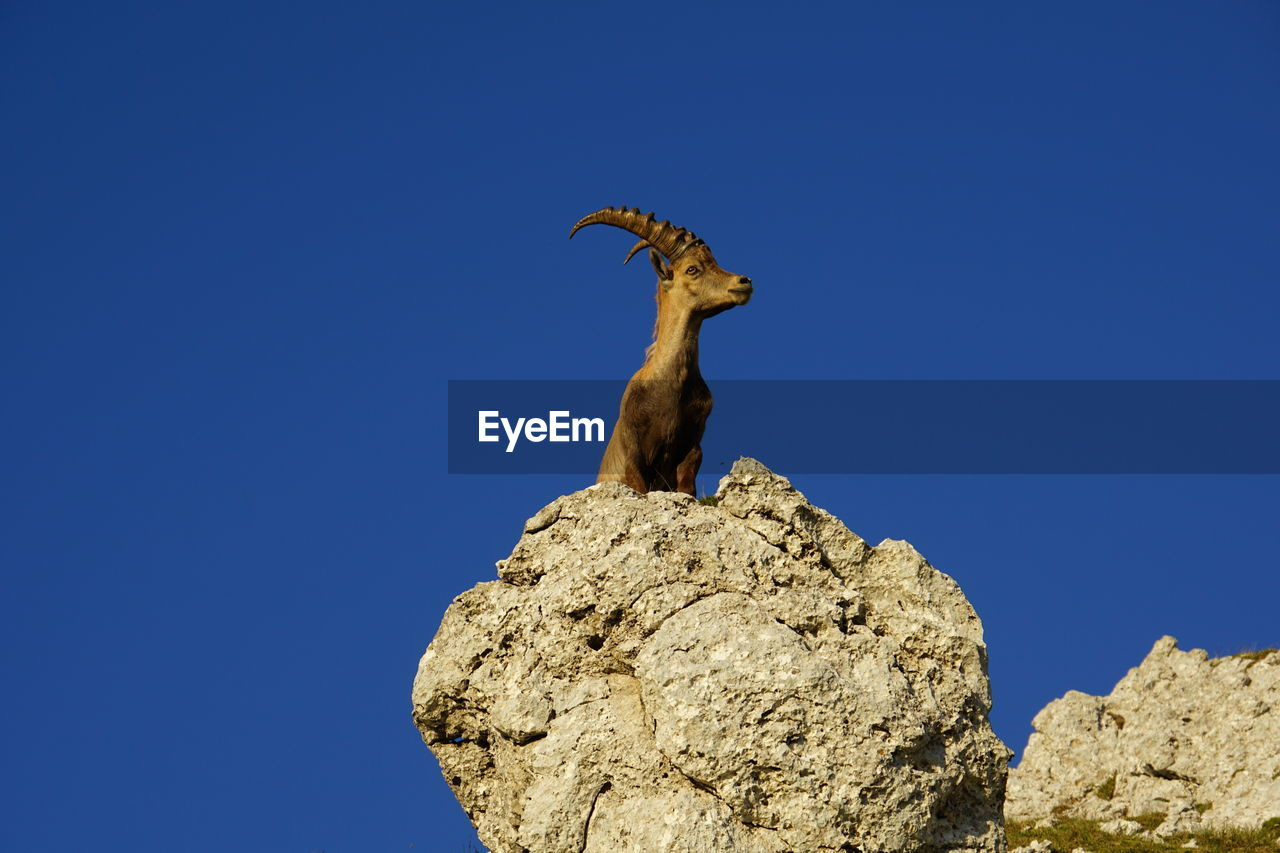 blue, low angle view, sky, rock, solid, one animal, rock - object, animal, clear sky, animal themes, animal wildlife, copy space, animals in the wild, vertebrate, nature, no people, day, sunlight, rock formation, outdoors, herbivorous, arid climate