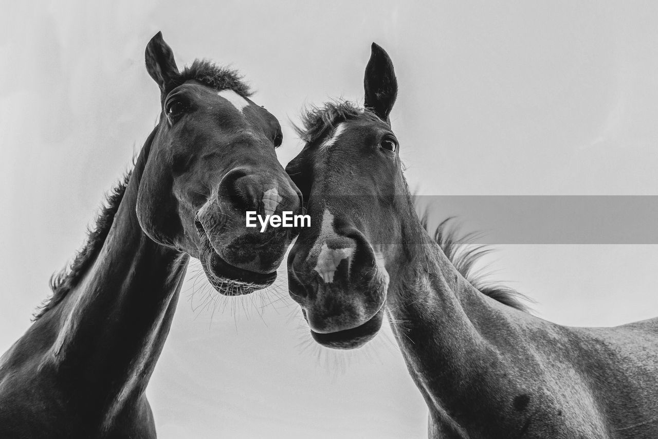 Low Angle View Of Horses Against Clear Sky