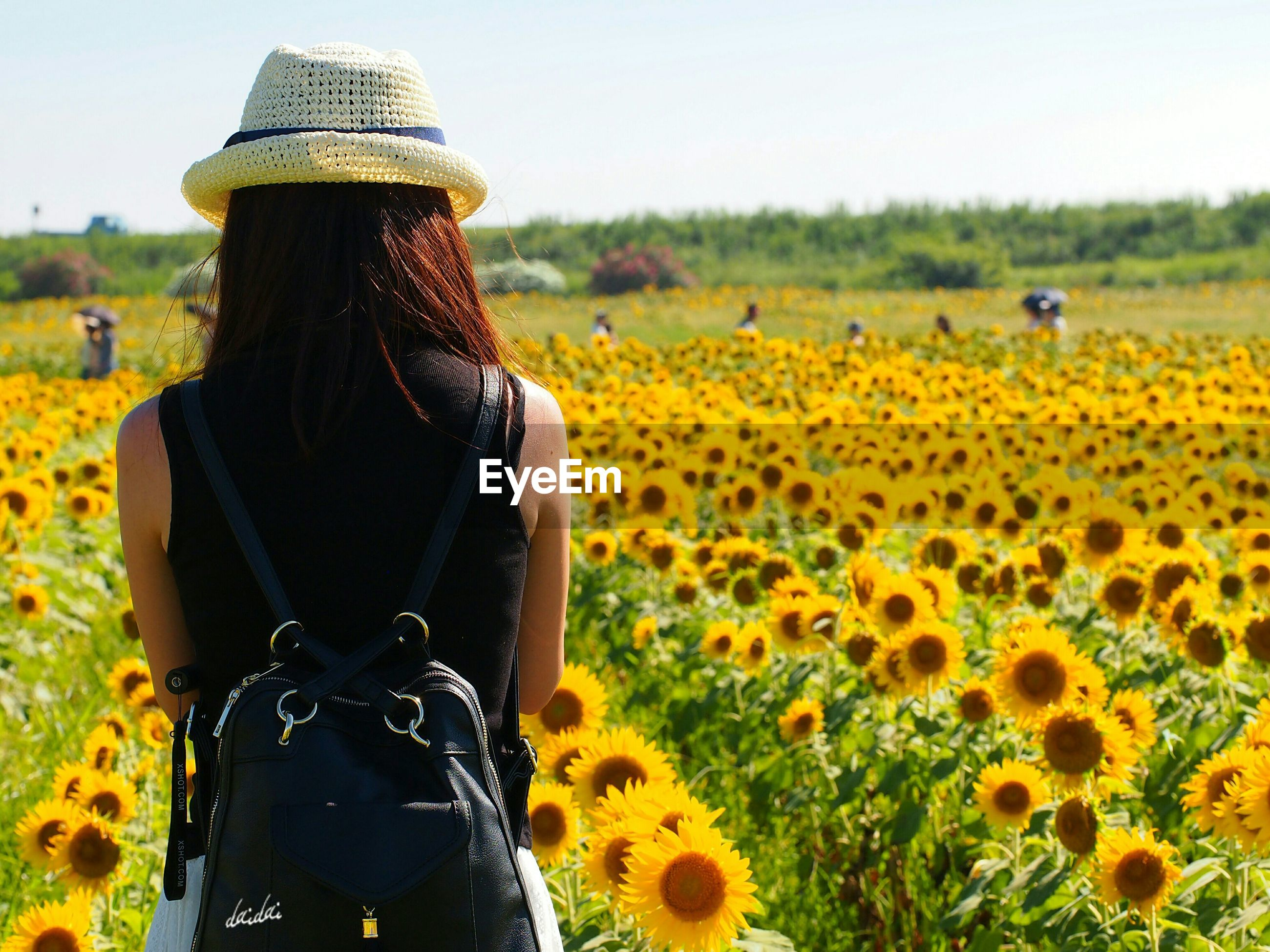 flower, field, yellow, lifestyles, agriculture, leisure activity, rural scene, beauty in nature, farm, landscape, focus on foreground, rear view, nature, plant, crop, clear sky, casual clothing, growth