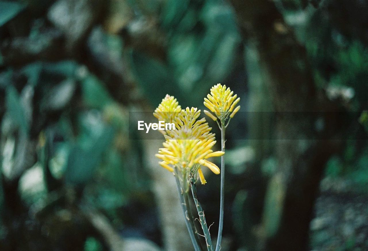 flower, plant, flowering plant, fragility, freshness, vulnerability, beauty in nature, growth, focus on foreground, flower head, yellow, close-up, petal, inflorescence, nature, day, no people, plant stem, outdoors, botany, pollen
