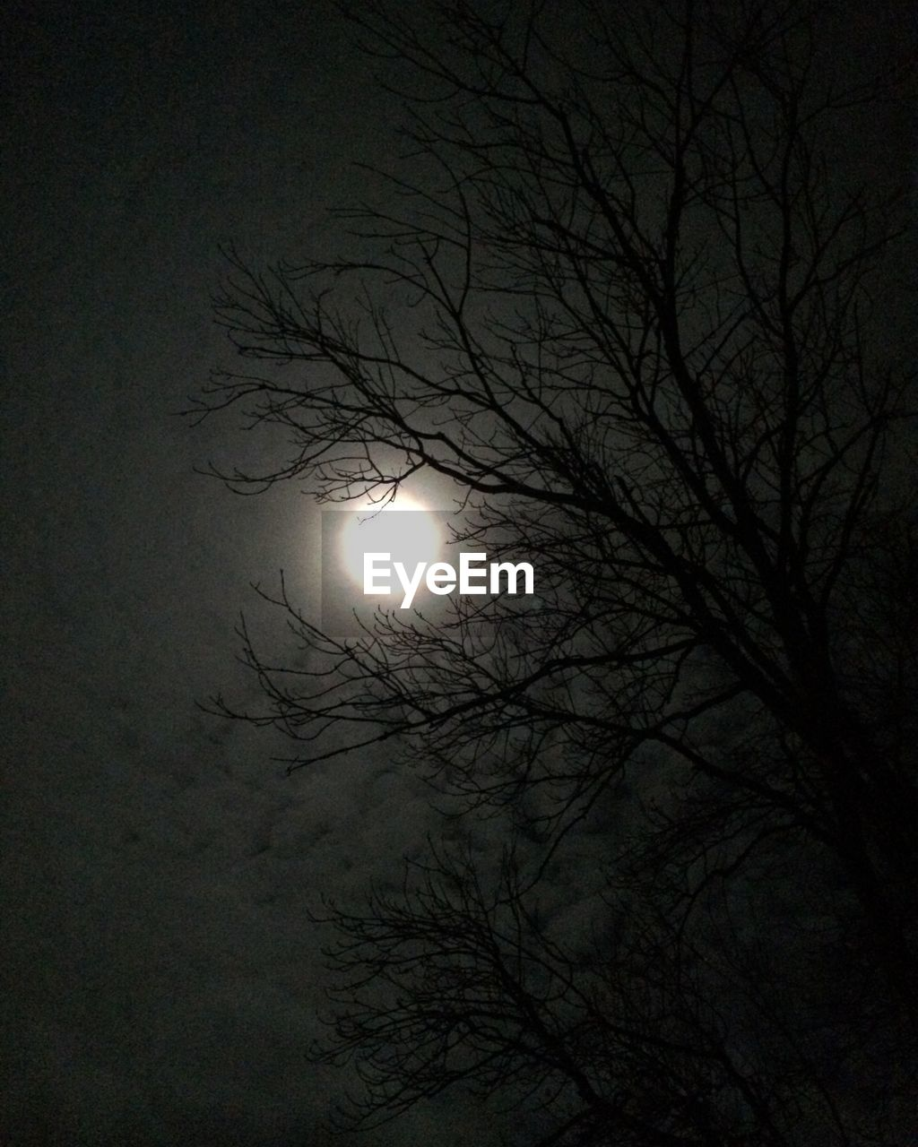 moon, bare tree, low angle view, night, tree, branch, nature, beauty in nature, moonlight, astronomy, no people, outdoors, tranquility, silhouette, scenics, solar eclipse, sky