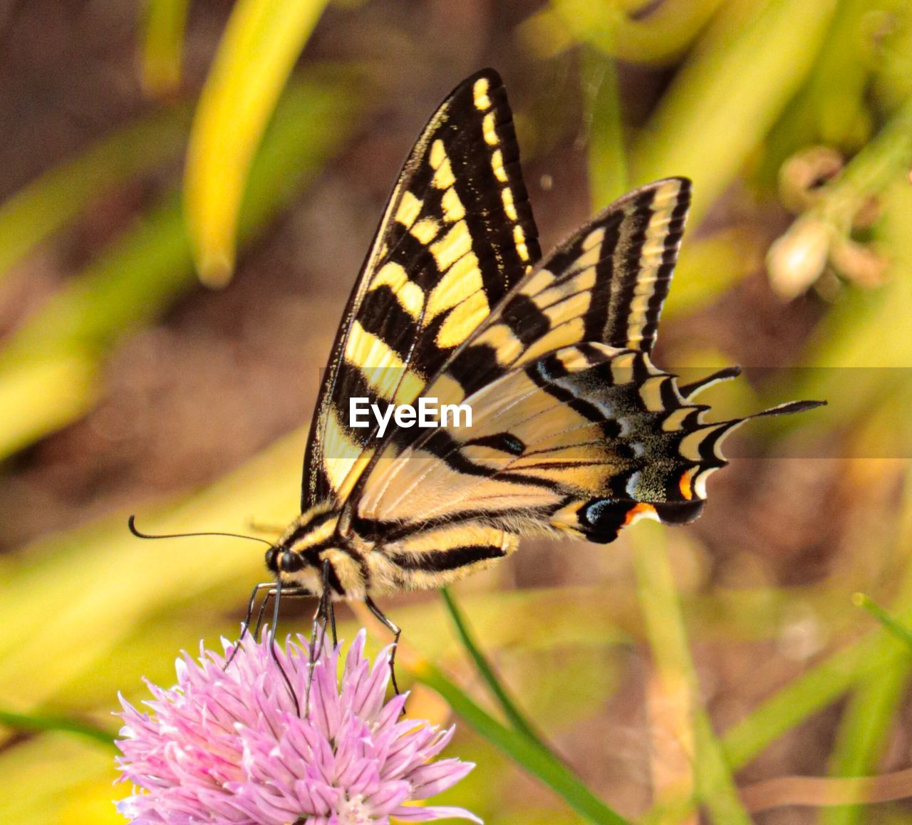 flower, flowering plant, insect, animal wildlife, animal themes, beauty in nature, invertebrate, plant, animals in the wild, animal, one animal, butterfly - insect, growth, fragility, vulnerability, animal wing, close-up, freshness, petal, flower head, no people, pollination, outdoors, butterfly