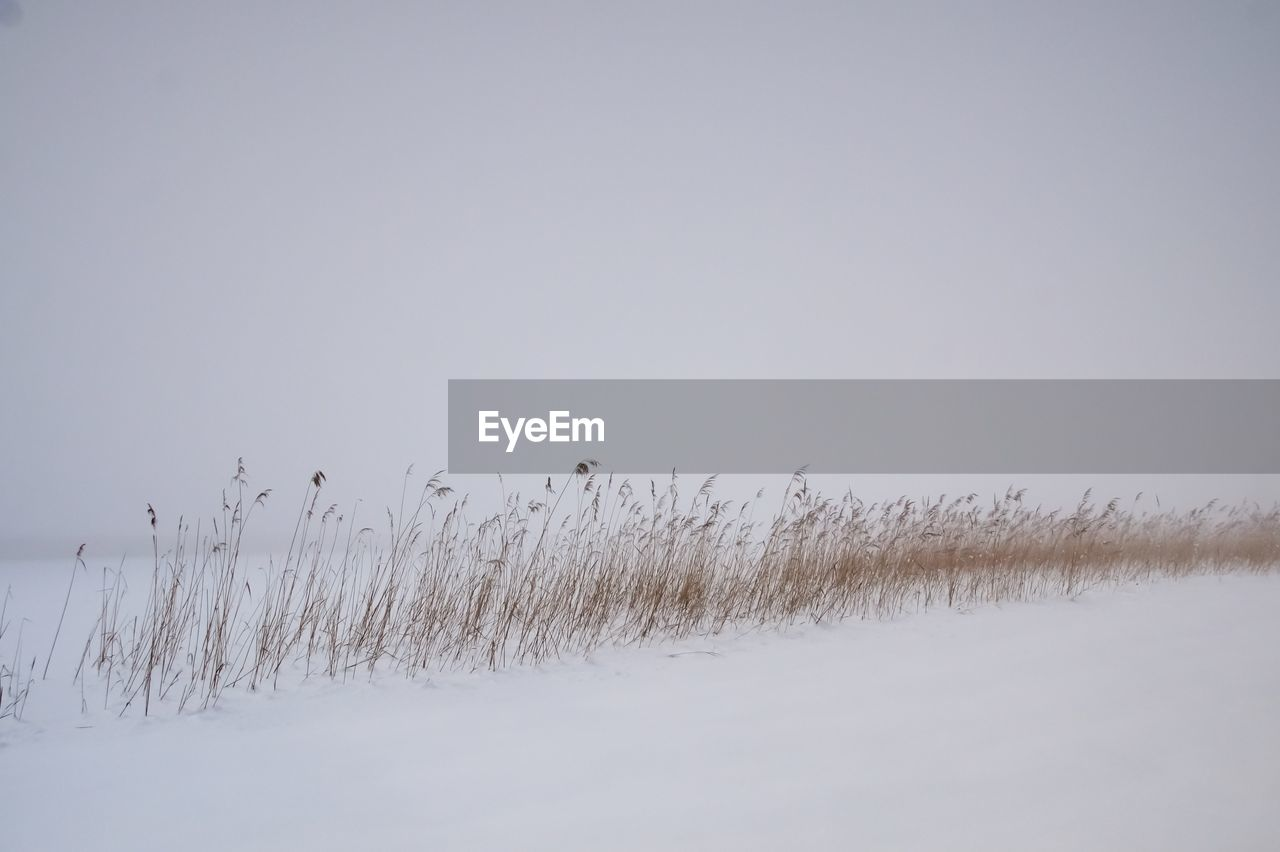 Scenic View Of Frozen Field Against Clear Sky During Winter