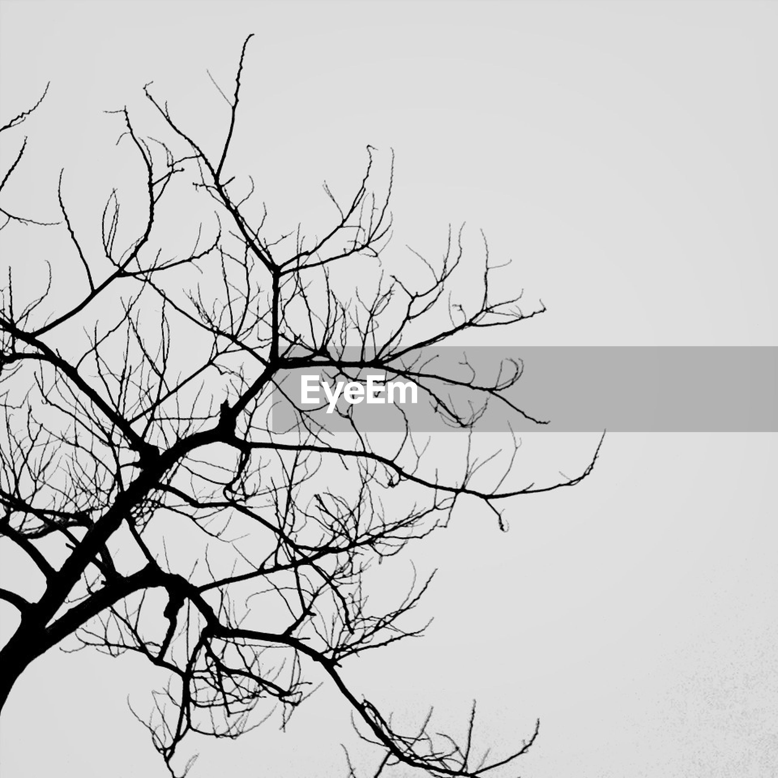 bare tree, branch, clear sky, low angle view, tree, nature, tranquility, beauty in nature, copy space, silhouette, sky, dead plant, outdoors, no people, scenics, day, tranquil scene, growth, single tree, bird