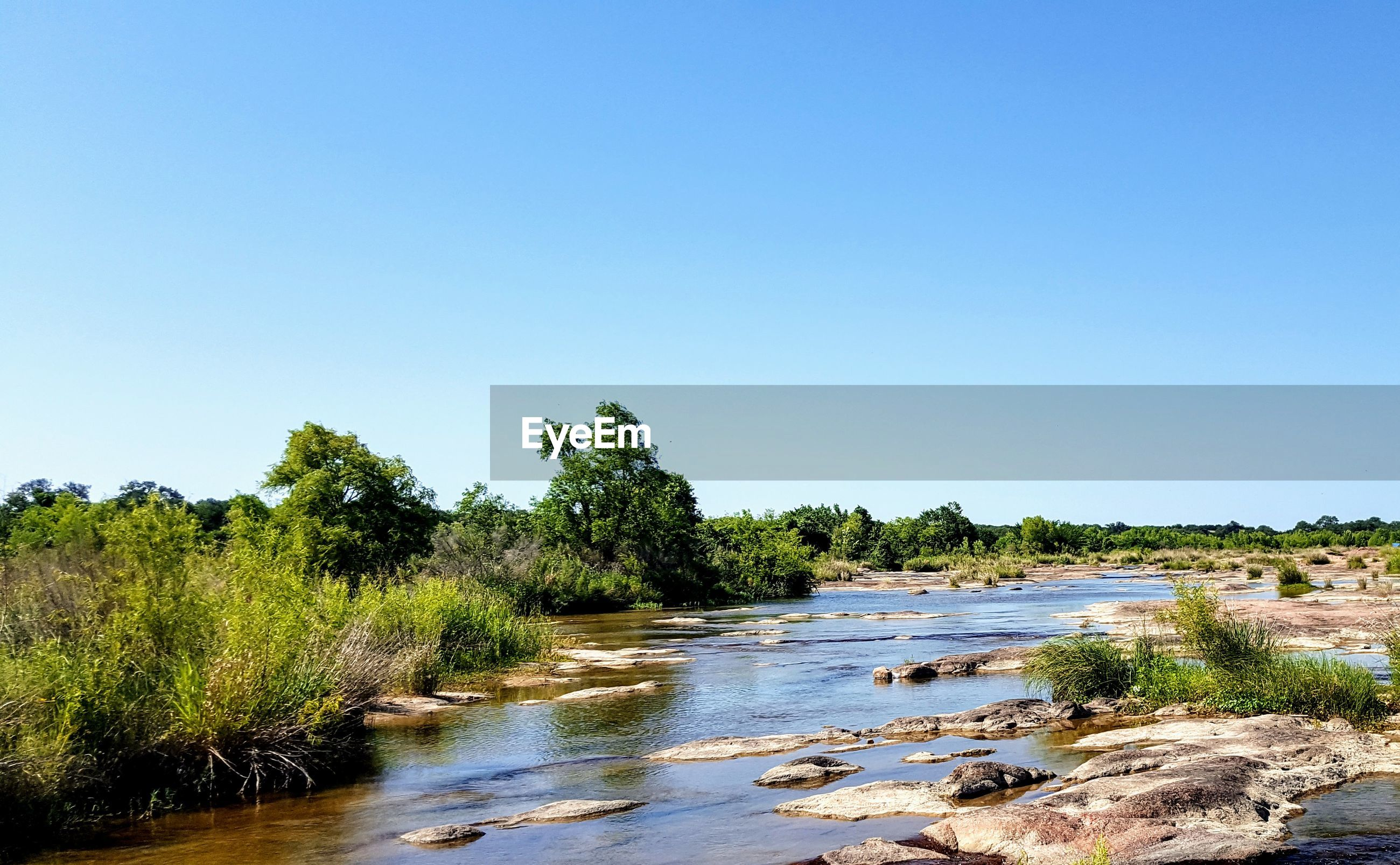 Scenic view of river amidst trees against clear sky