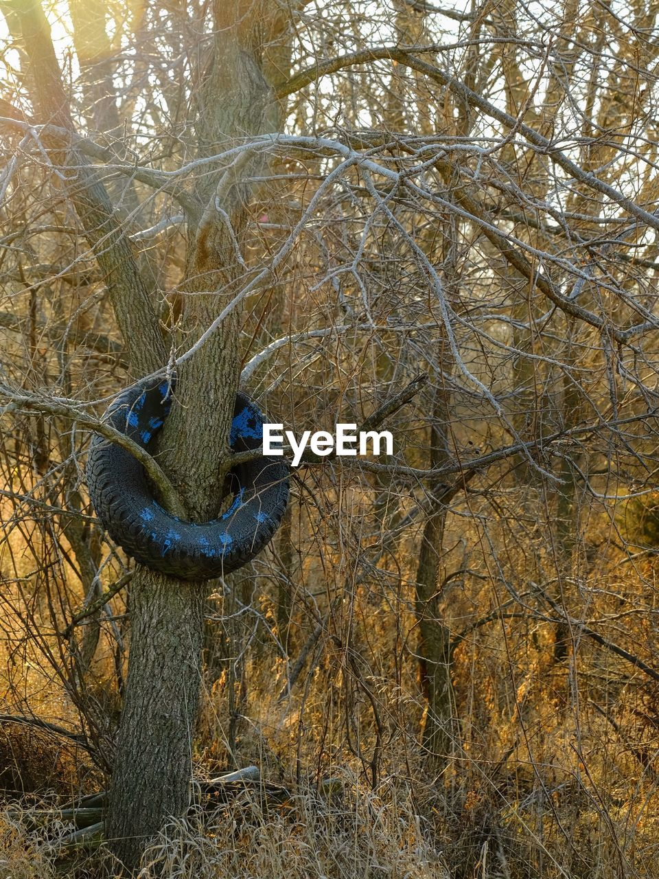 Tire On Bare Tree At Forest