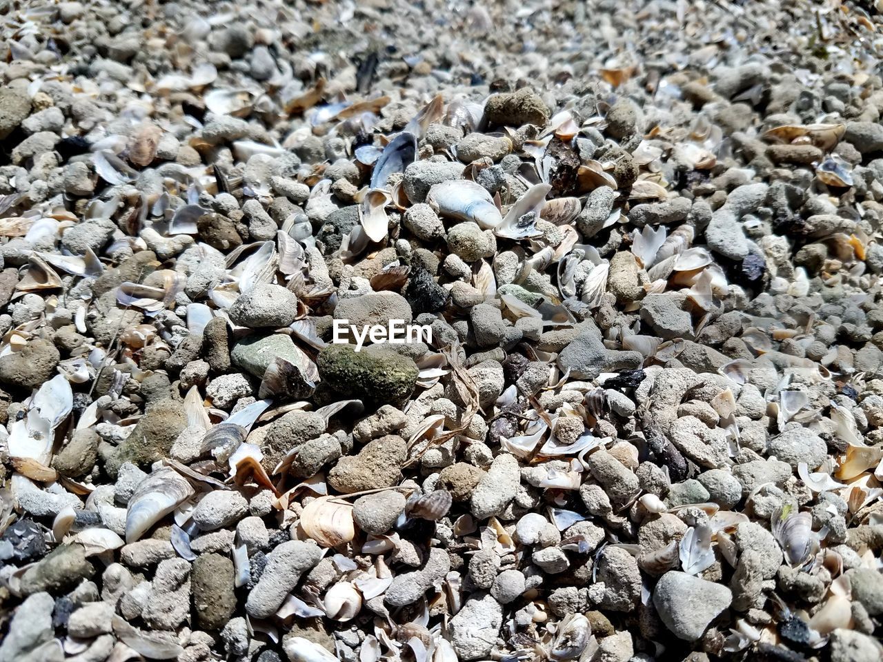 beach, pebble, shore, pebble beach, nature, no people, abundance, full frame, day, large group of objects, outdoors, sand, backgrounds, beauty in nature, close-up, animal themes